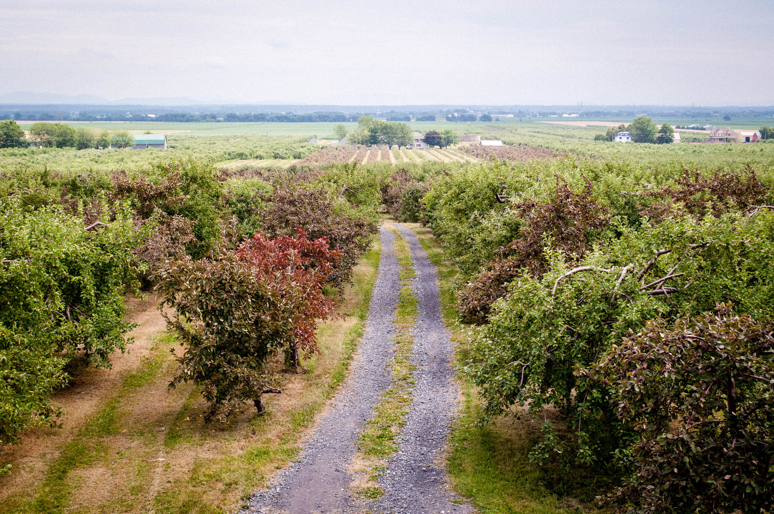 Different types of apple trees at Michel Jodoin