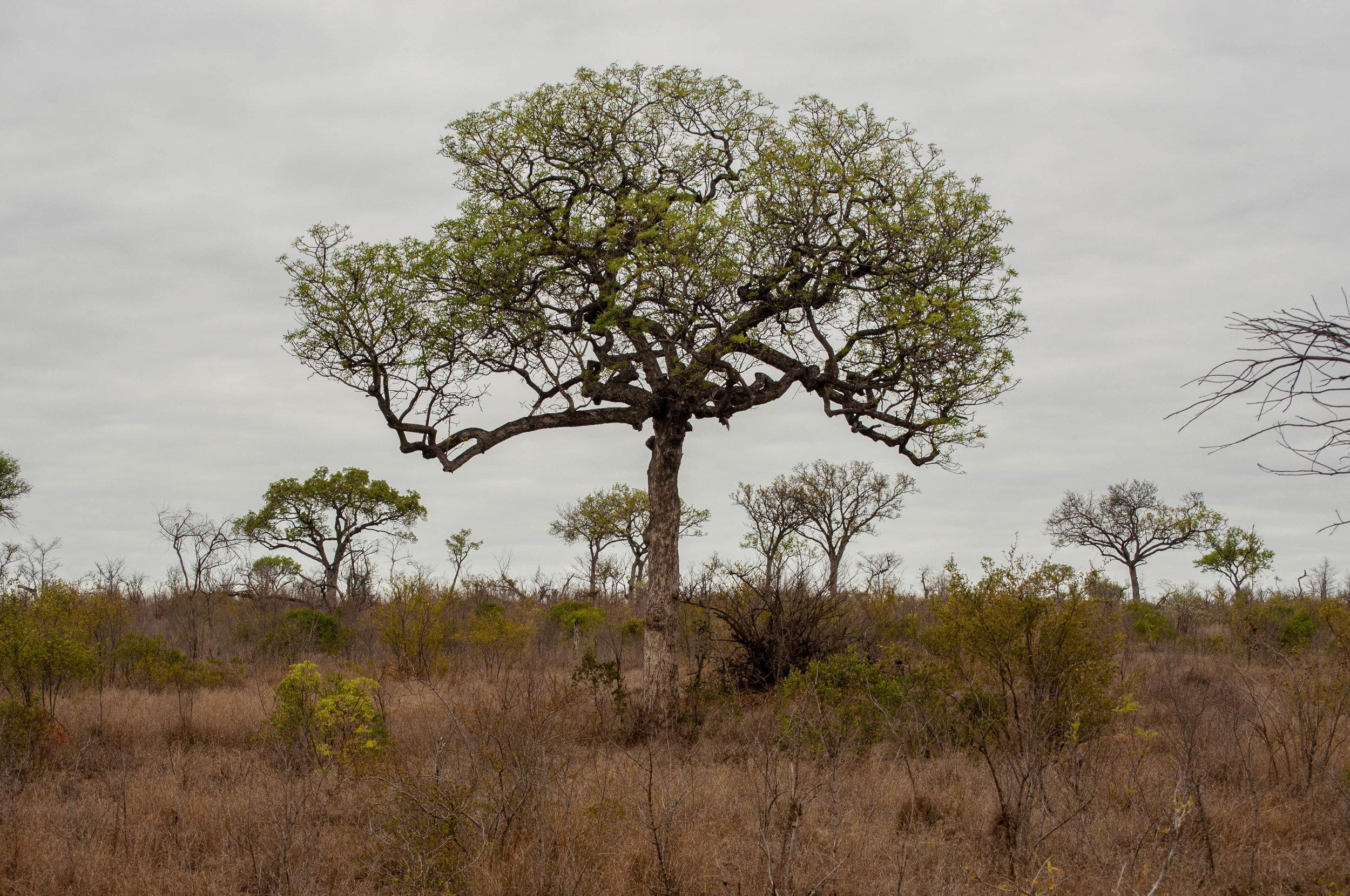 Kruger park. safari planner