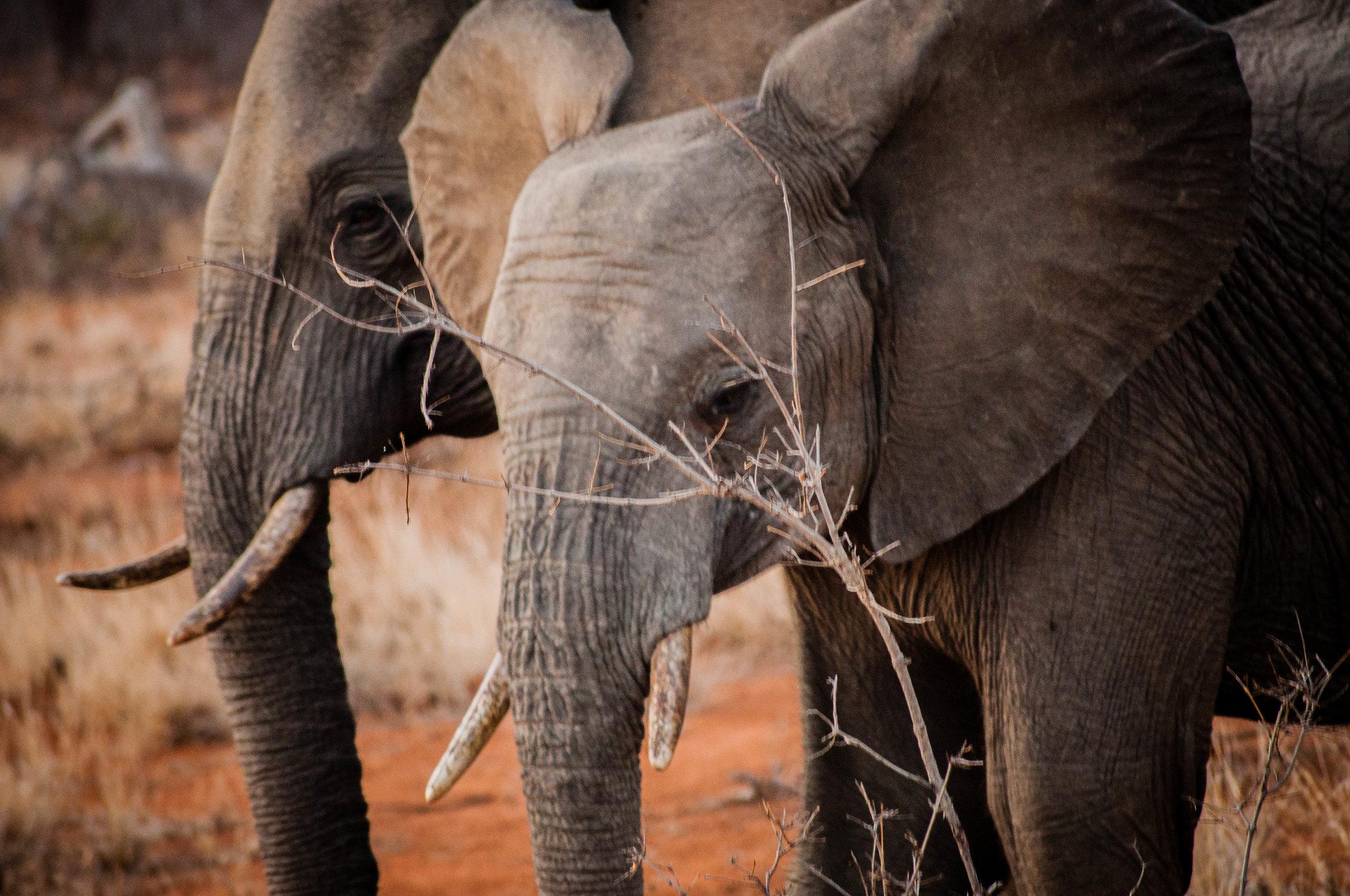 Baby elephant at Kruger park. safari planner