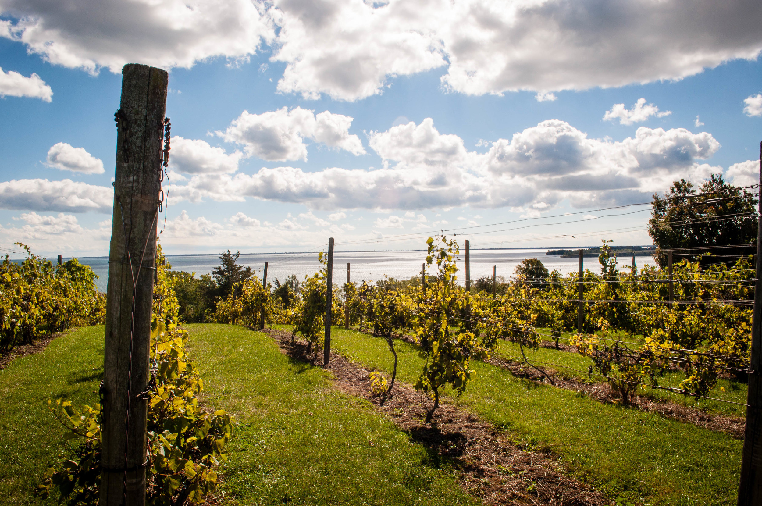 Prince Edward county vineyards - Trip from Montreal