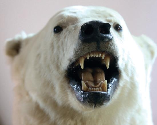 The three-metre high polar bear from Canada that greets visitors to the museum.