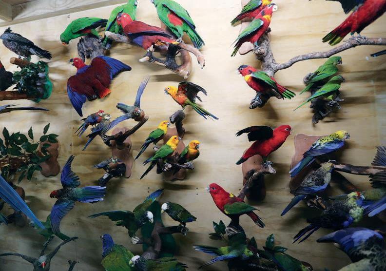A selection of Australian parrots and birds.