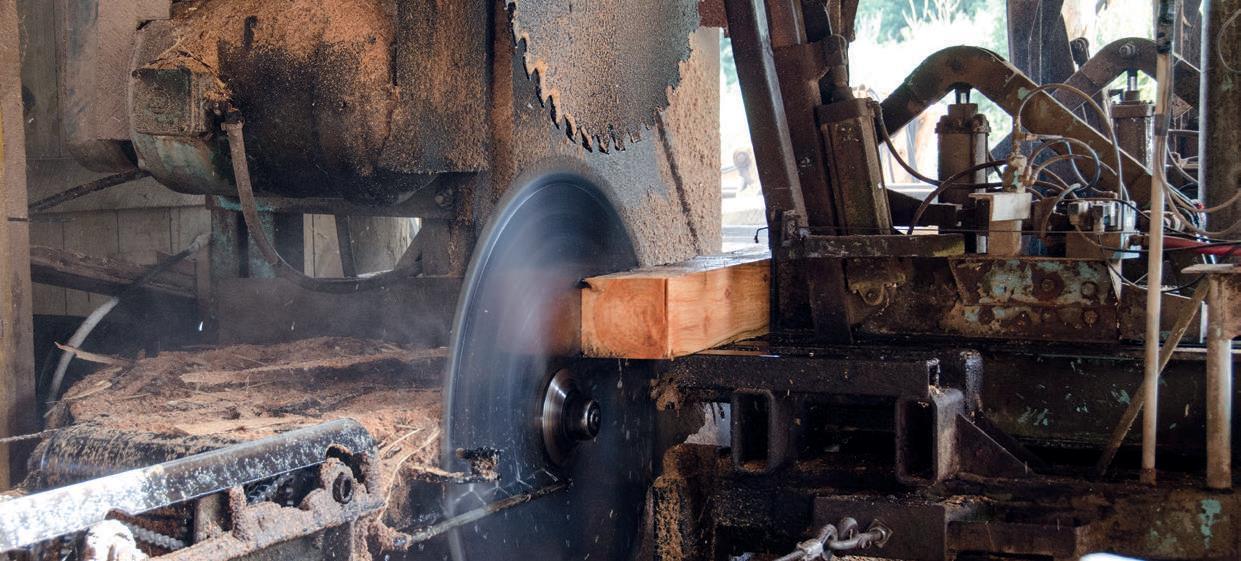 Breaking down macrocarpa logs