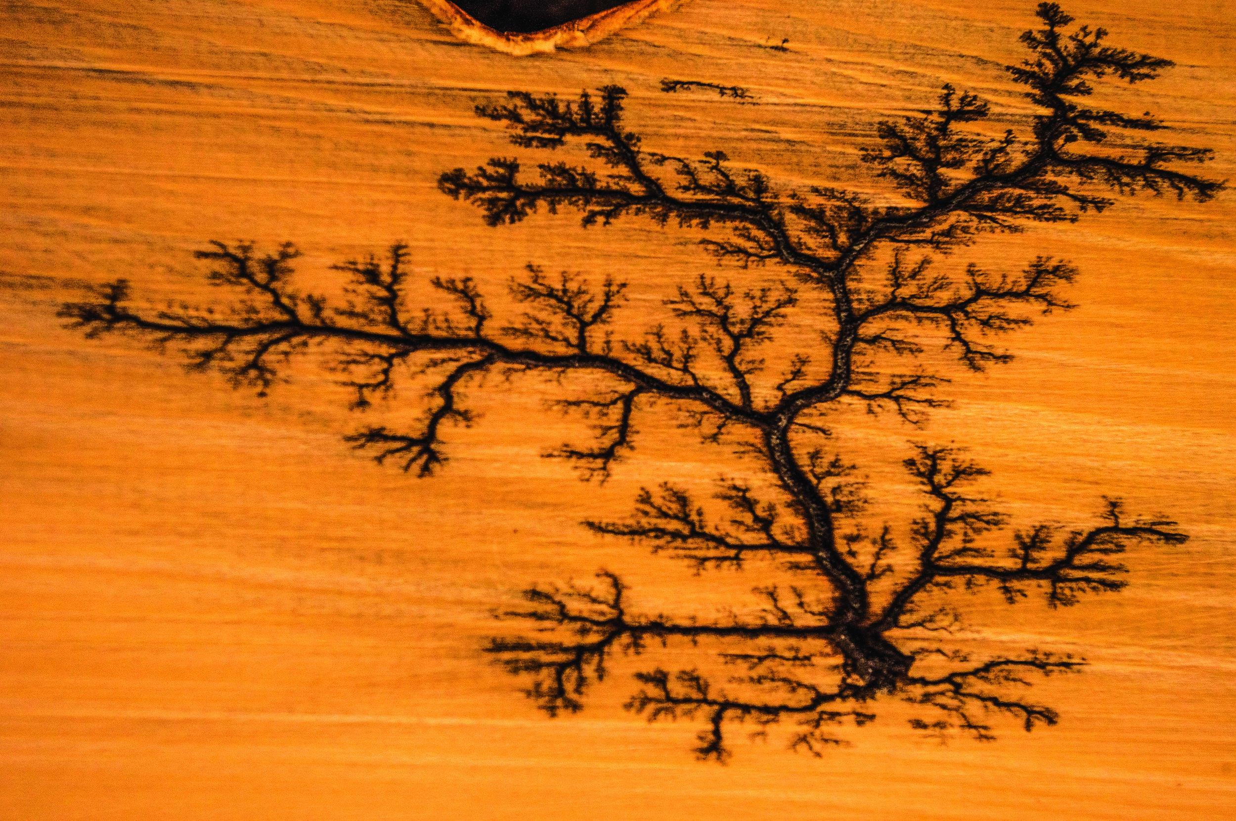 burn on celery pine01.jpg