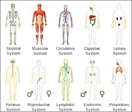 Human Body Systems.jpg