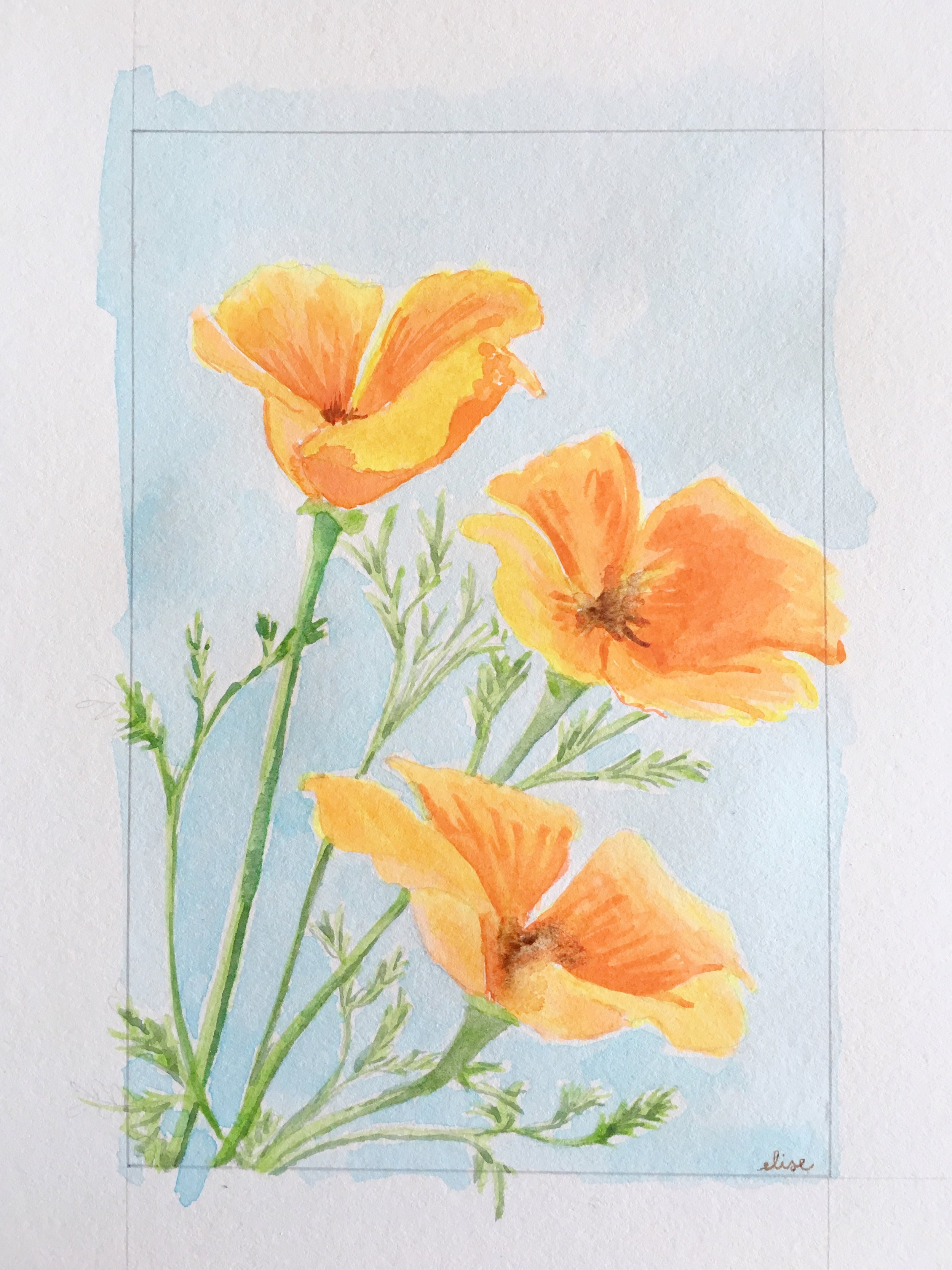 california-golden-poppies-state-flower-watercolor-painting-drawing-elisemade-by-elise-loepz