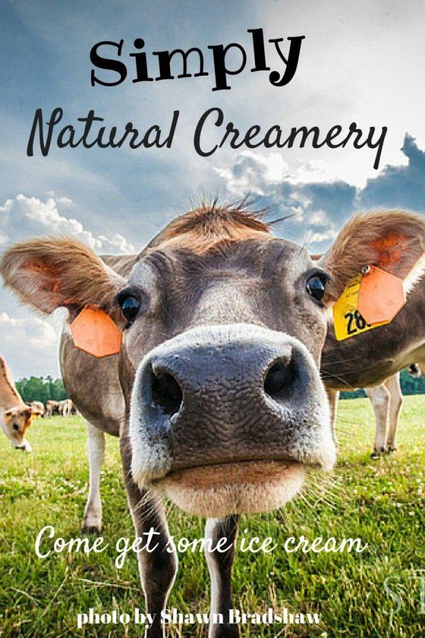 COW CREAMERY.jpg