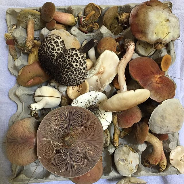 I asked them to find as many types of mushrooms in our yard as they could. I wasn't expecting this 😳 #wildandfreechildren #homeeducationlookslikethis #homeschoolfun