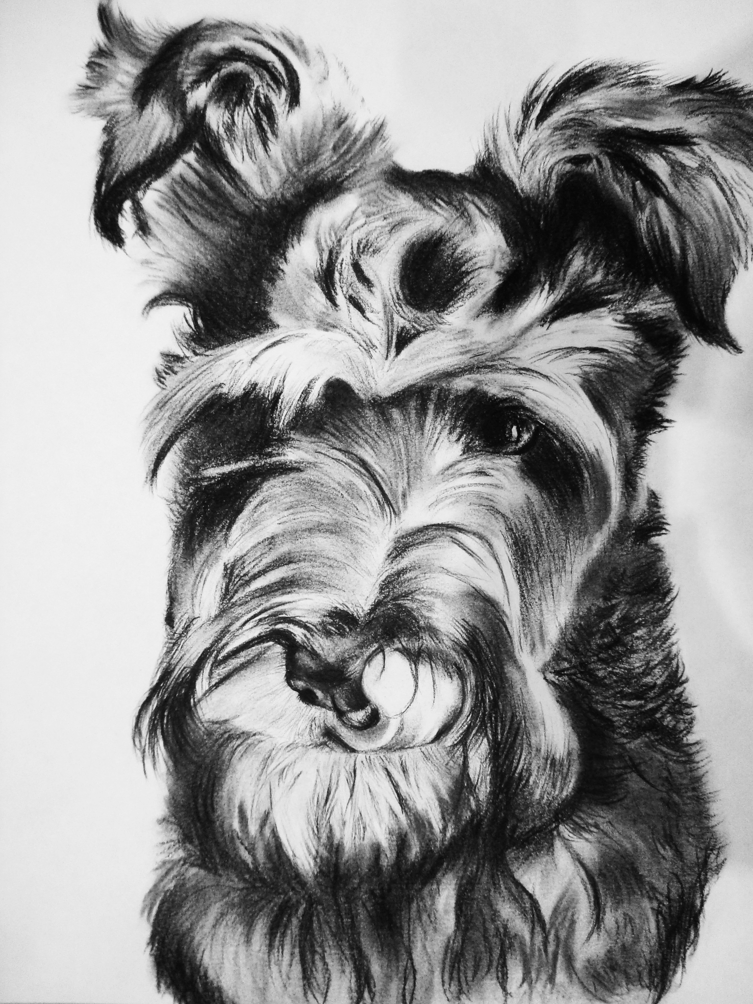 Rocky , charcoal