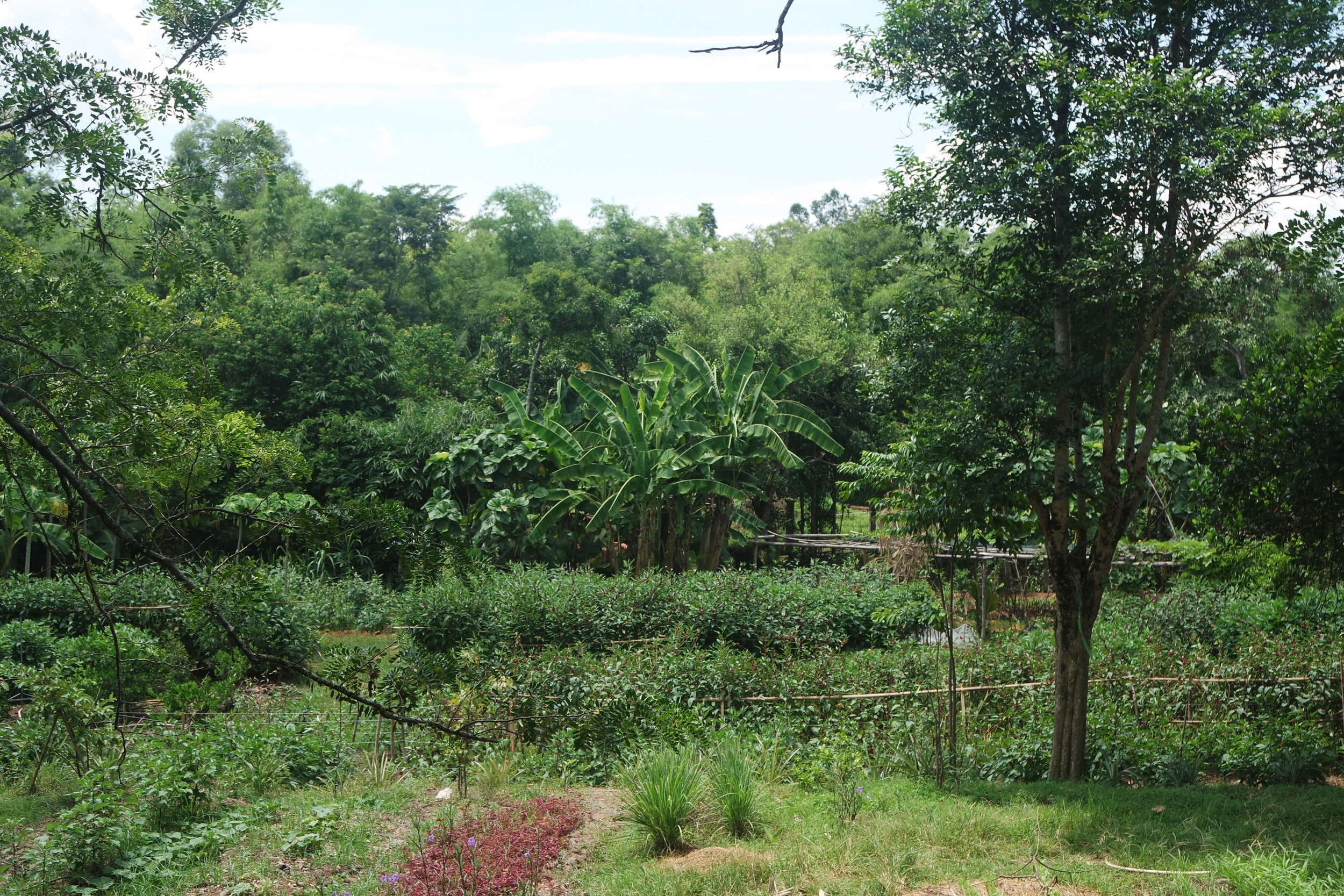 biodynamic garden as main food source of TTG in Hue