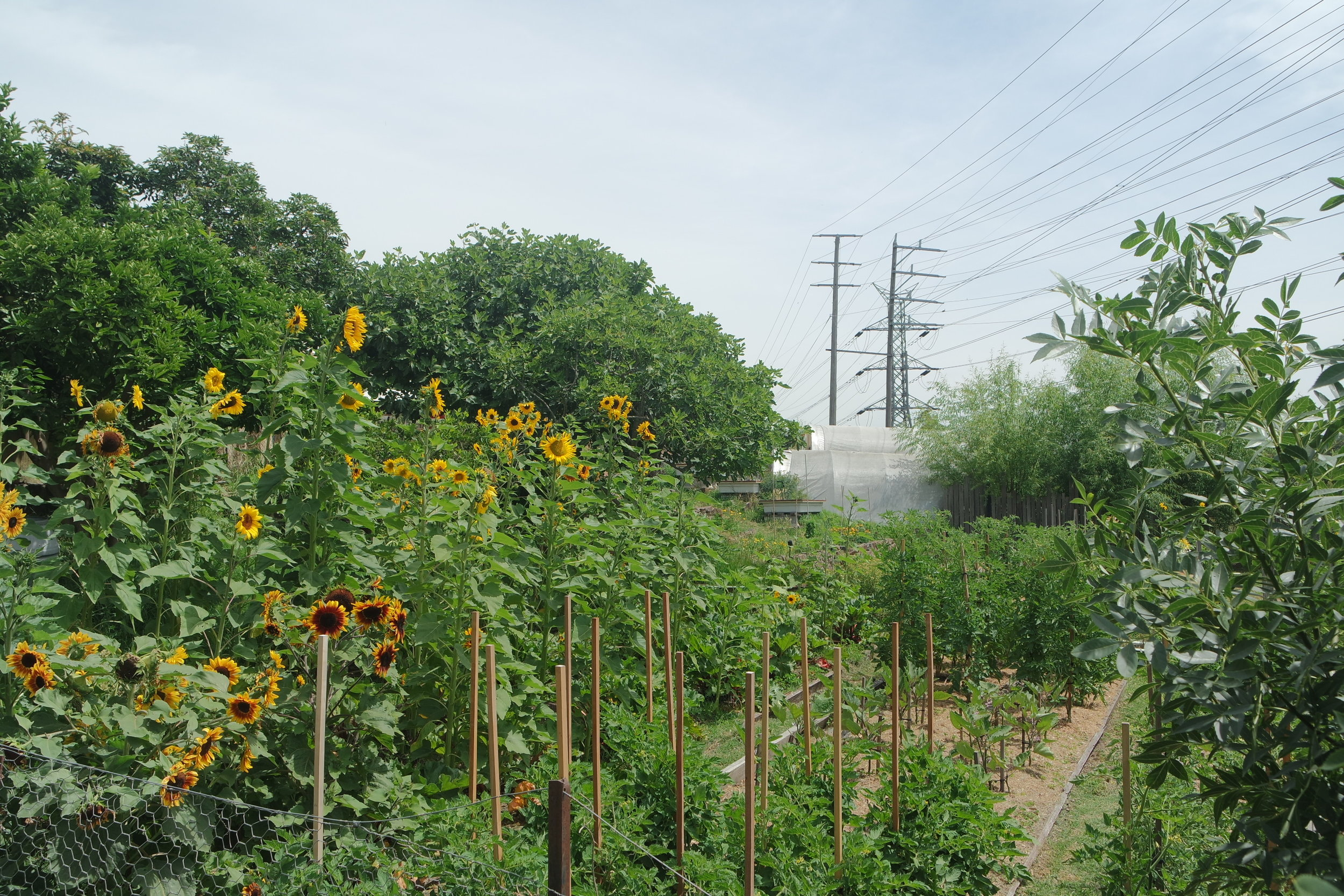 Well visible, the powerlines help to remember the history of the land and CERES development.