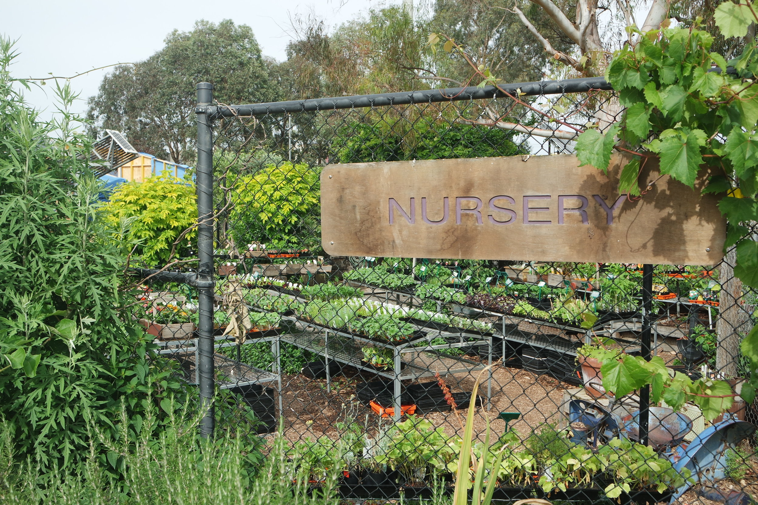CERES is thinking global and planting local:native plants at CERES permaculture and bushfood nursery.