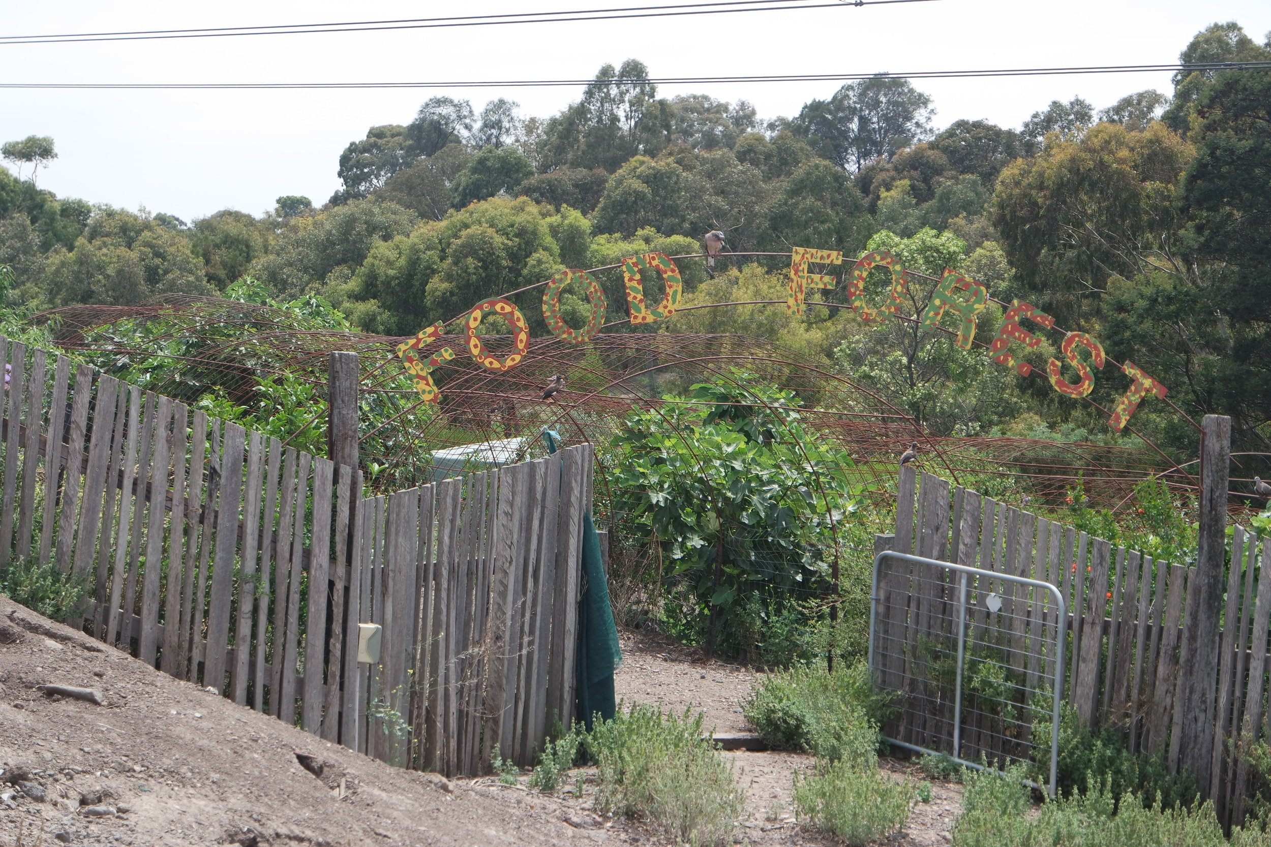 Restoration of nature can go hand in hand with food production in a permaculture food forest.