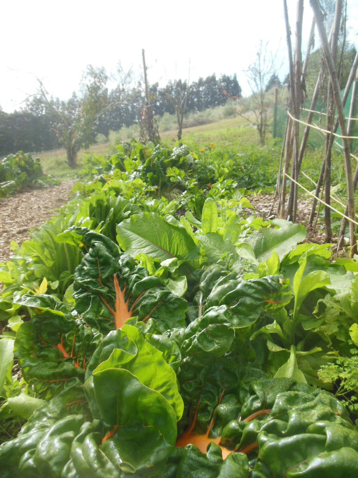 Growing vegetables in abundance depends on several factors.