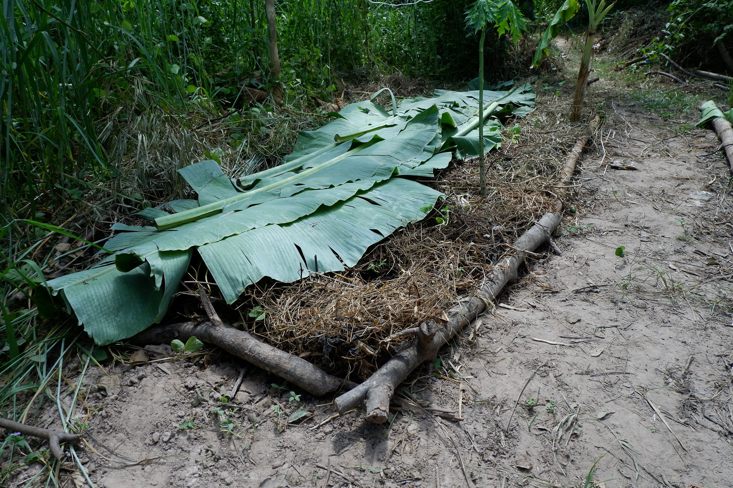 No-dig gardens help to enrich the soil even under poor conditions.