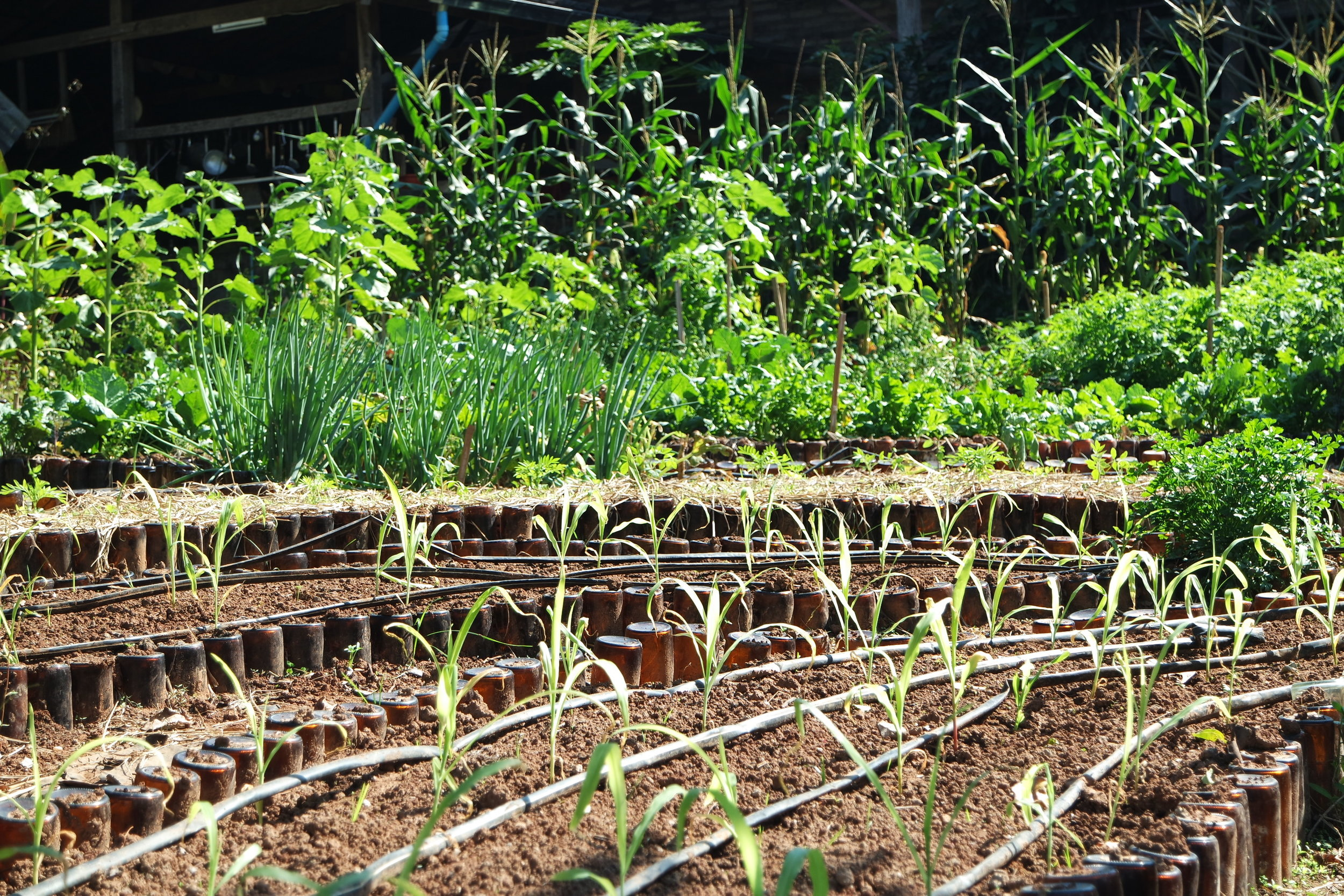 Double dig gardens are often used for intensive used areas such as kitchen gardens.