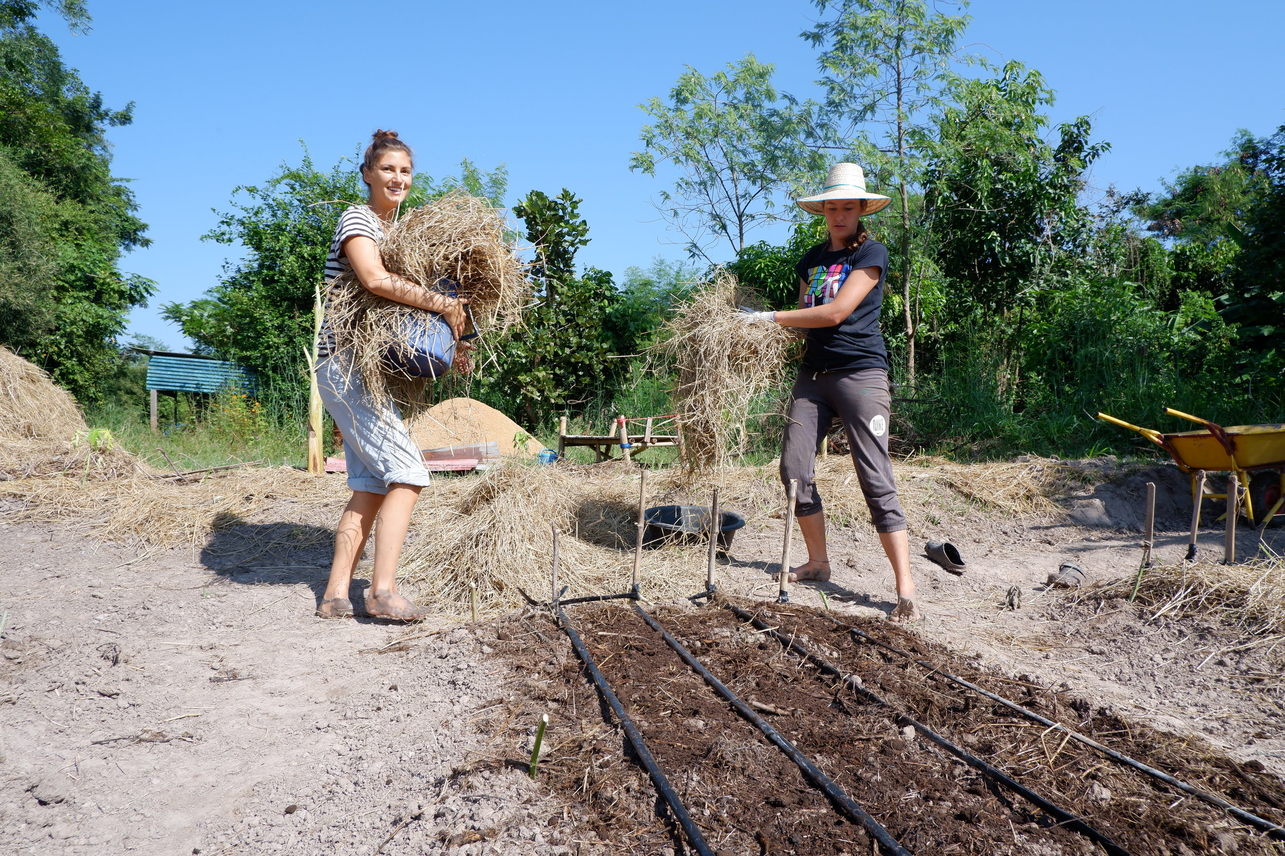 Mulching with straw brings a protective last layer against weeds.  Photo: Julien De Backer