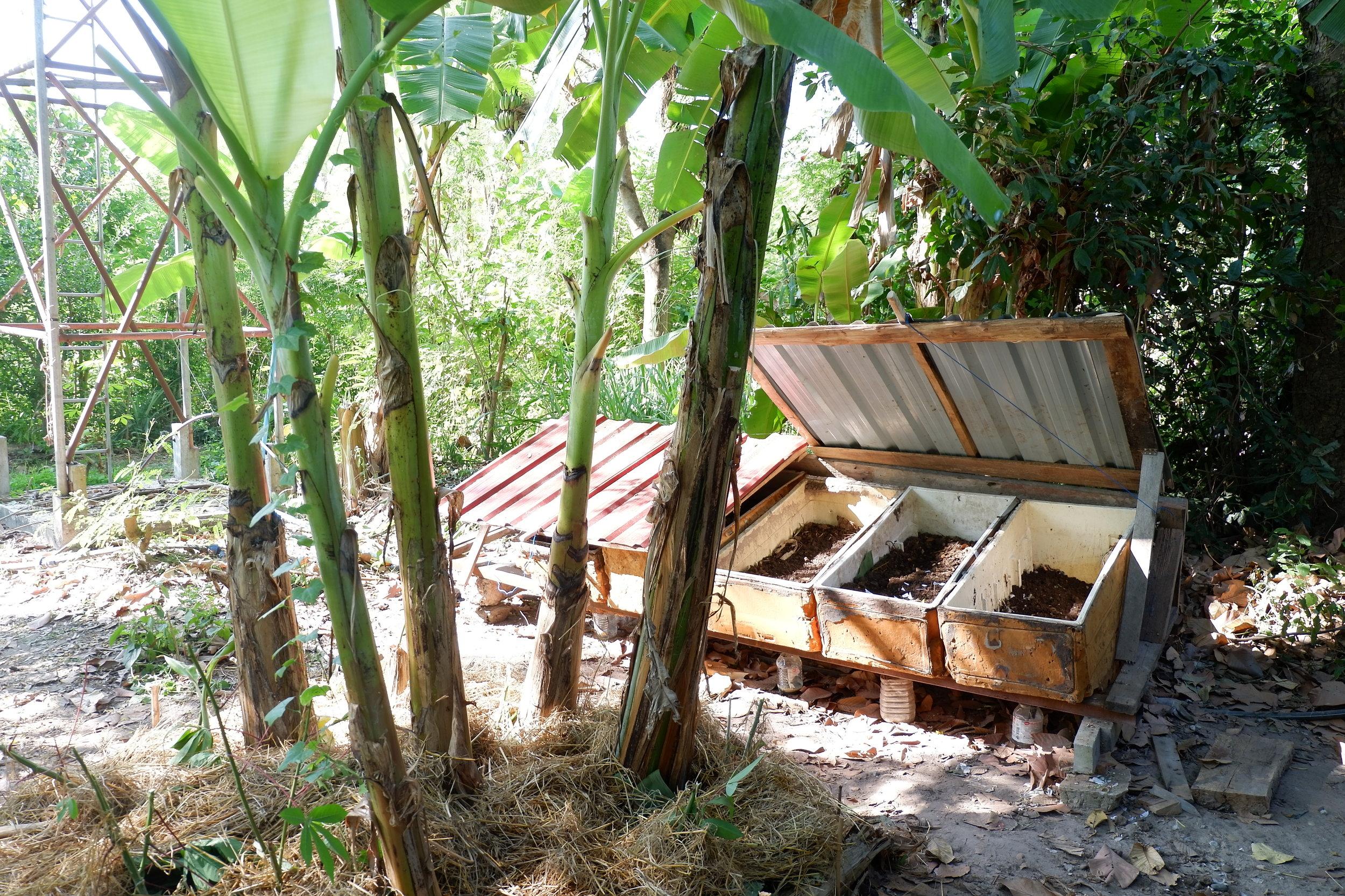Gaia Ashram's community worm farm close to the kitchen.