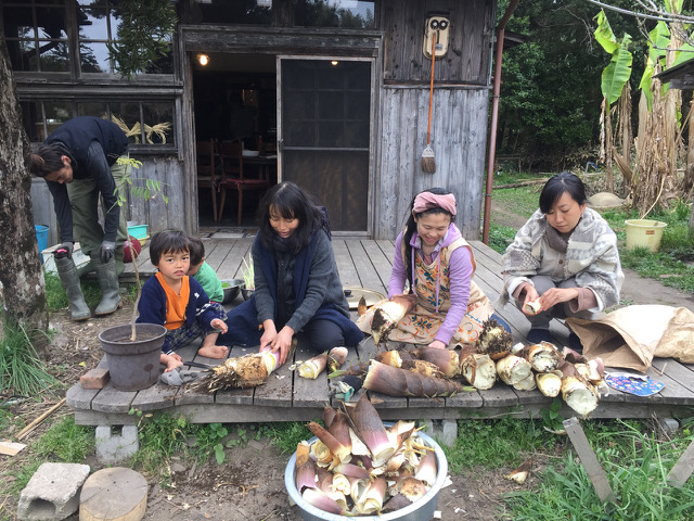 Harvesting bamboo shoots at Brown's Field, Japan.