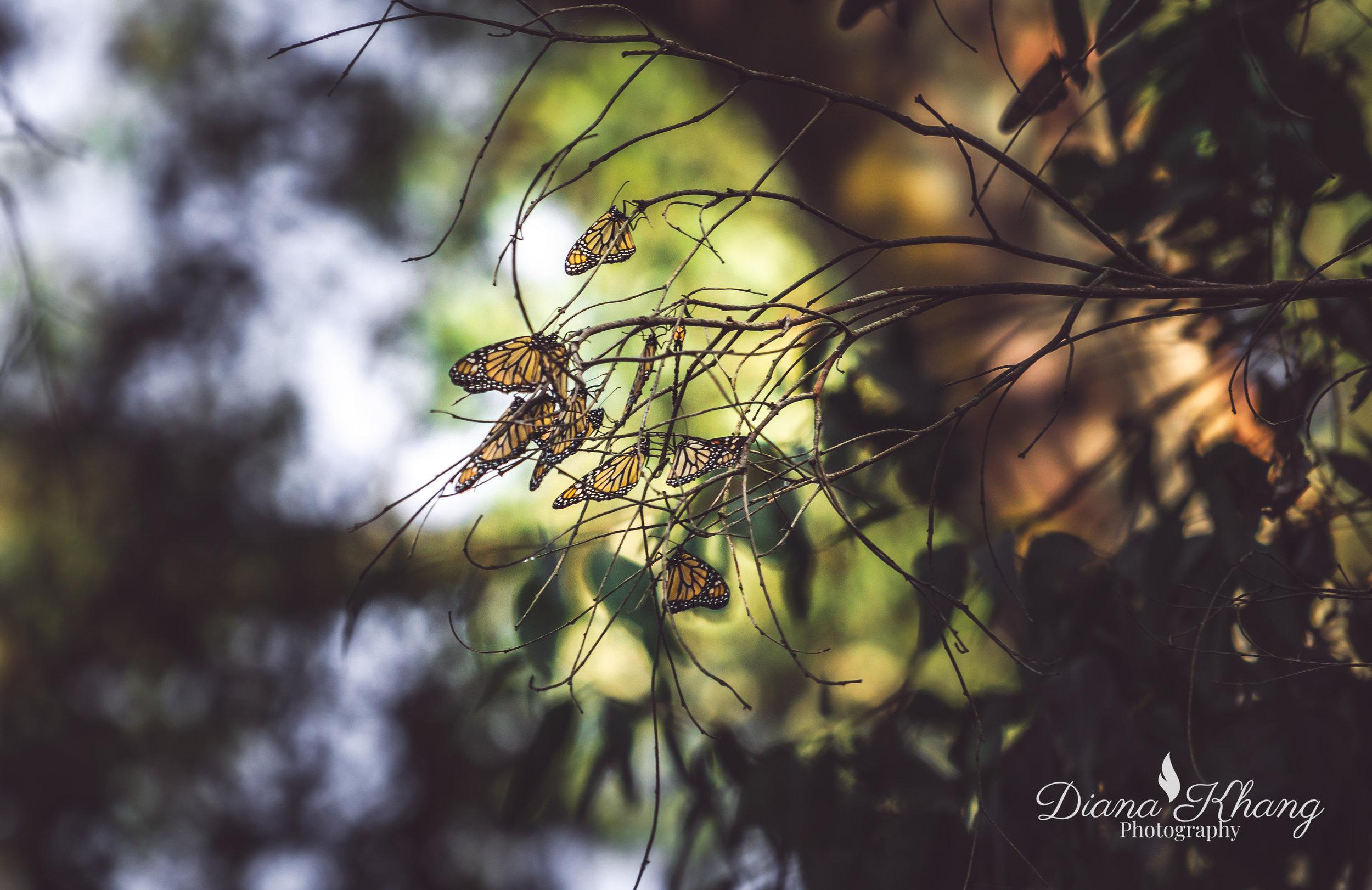 dianakhangphoto-3.jpg