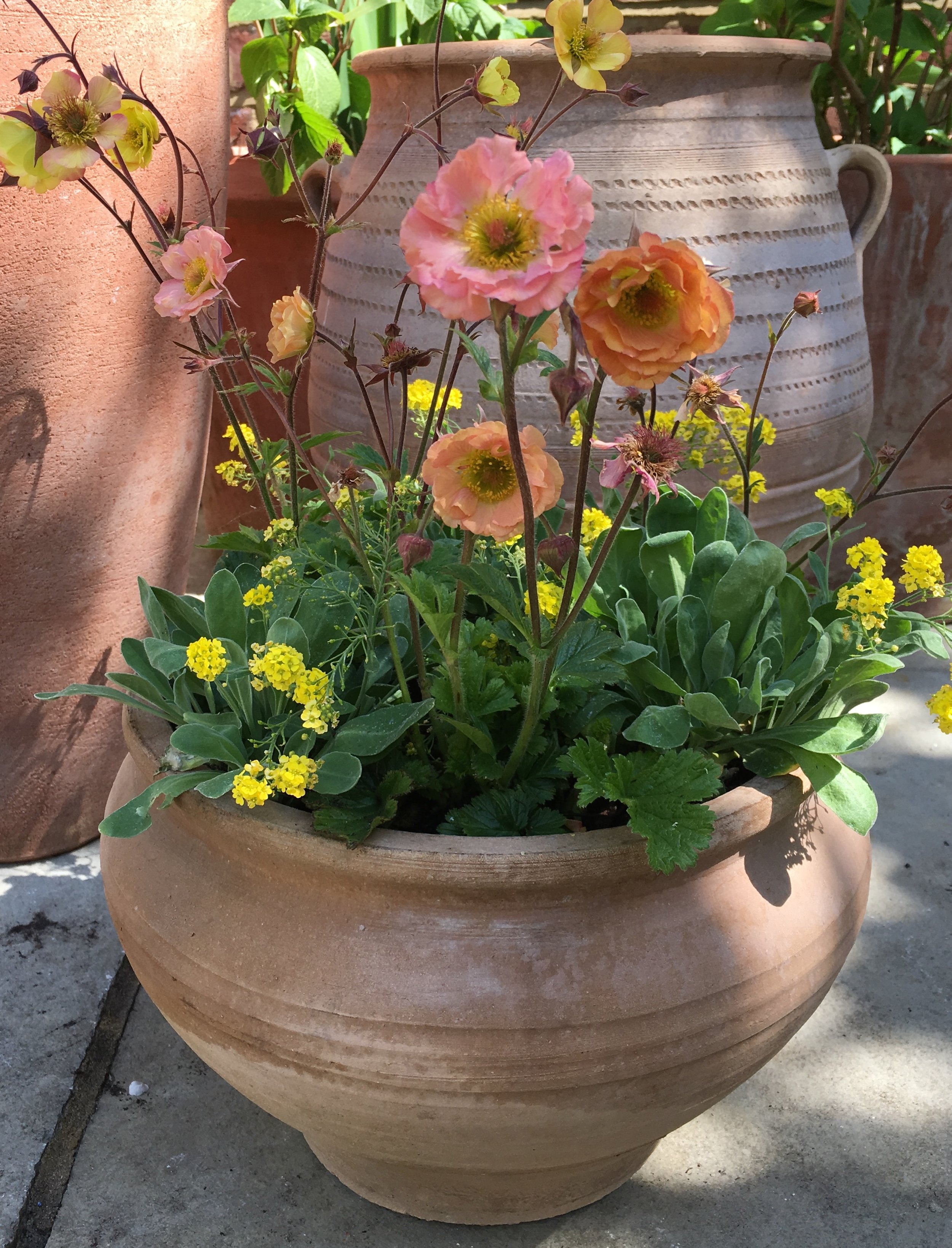joanna archer container planting.jpg