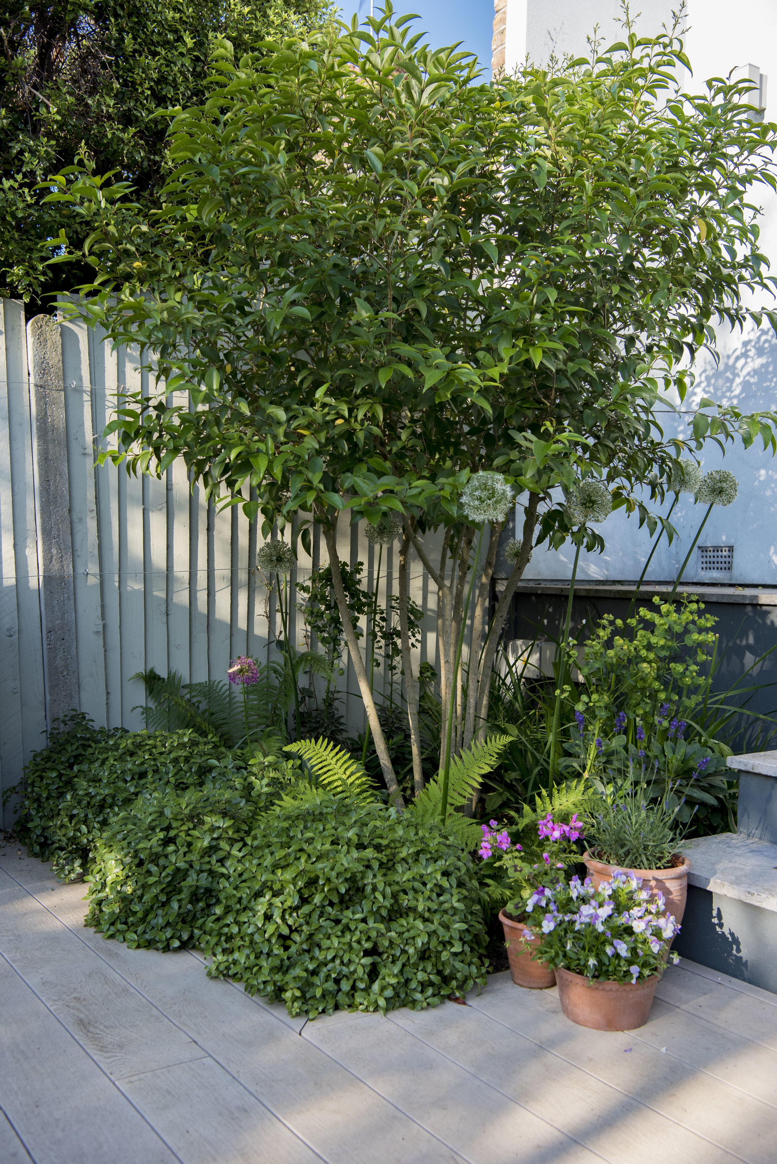 Joanna_Archer_Garden_Design_sun_terrace5.jpg