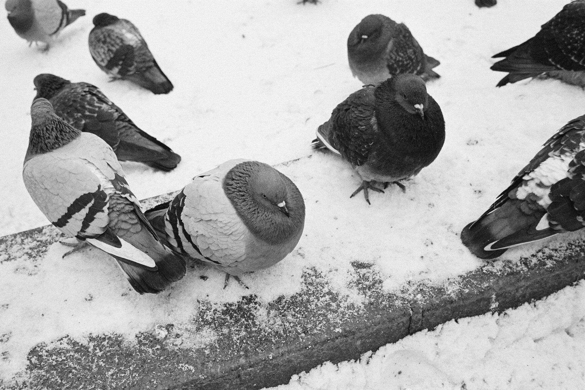Ignas_Winter-3.jpg