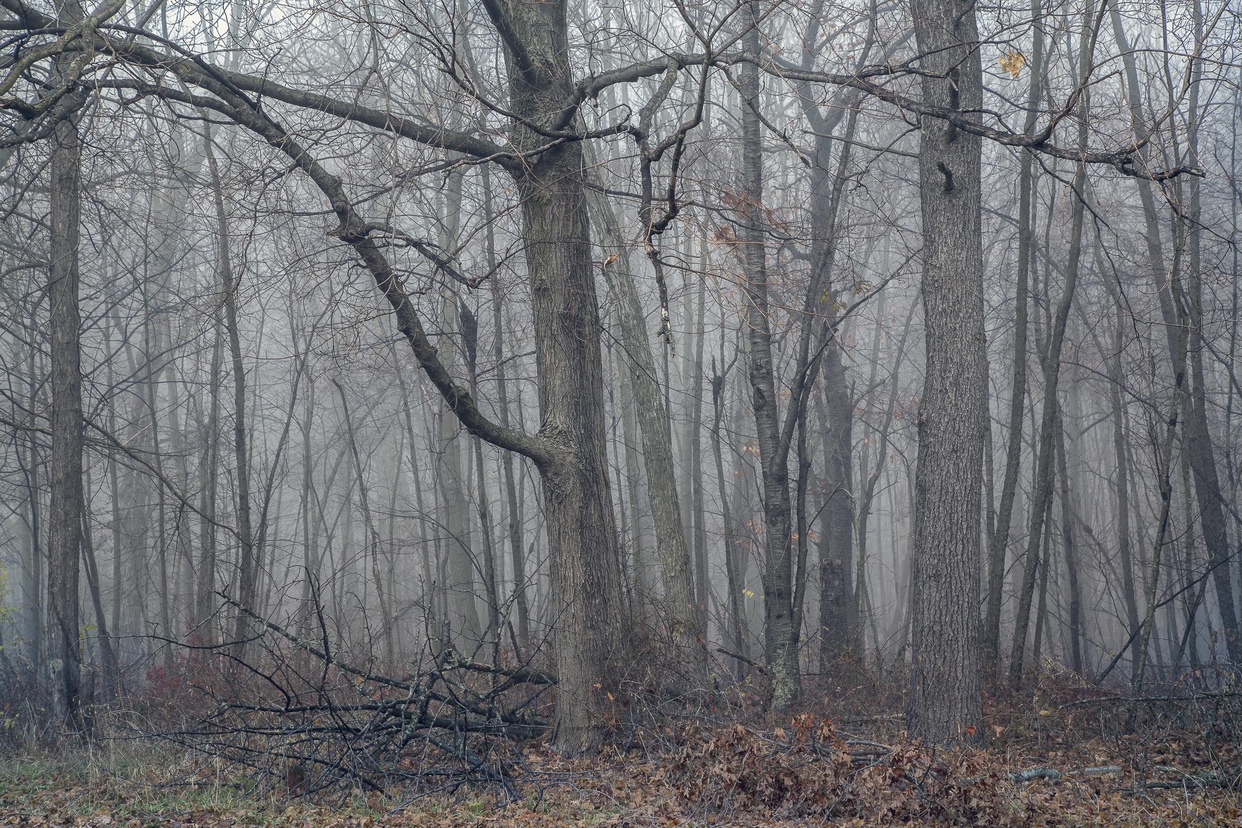 Fog-.jpg