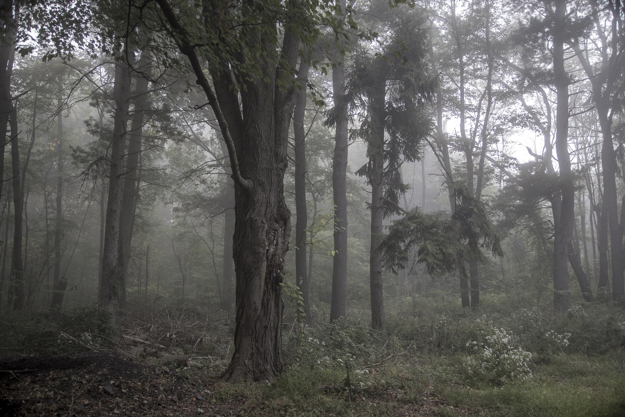 Fog-2750.jpg