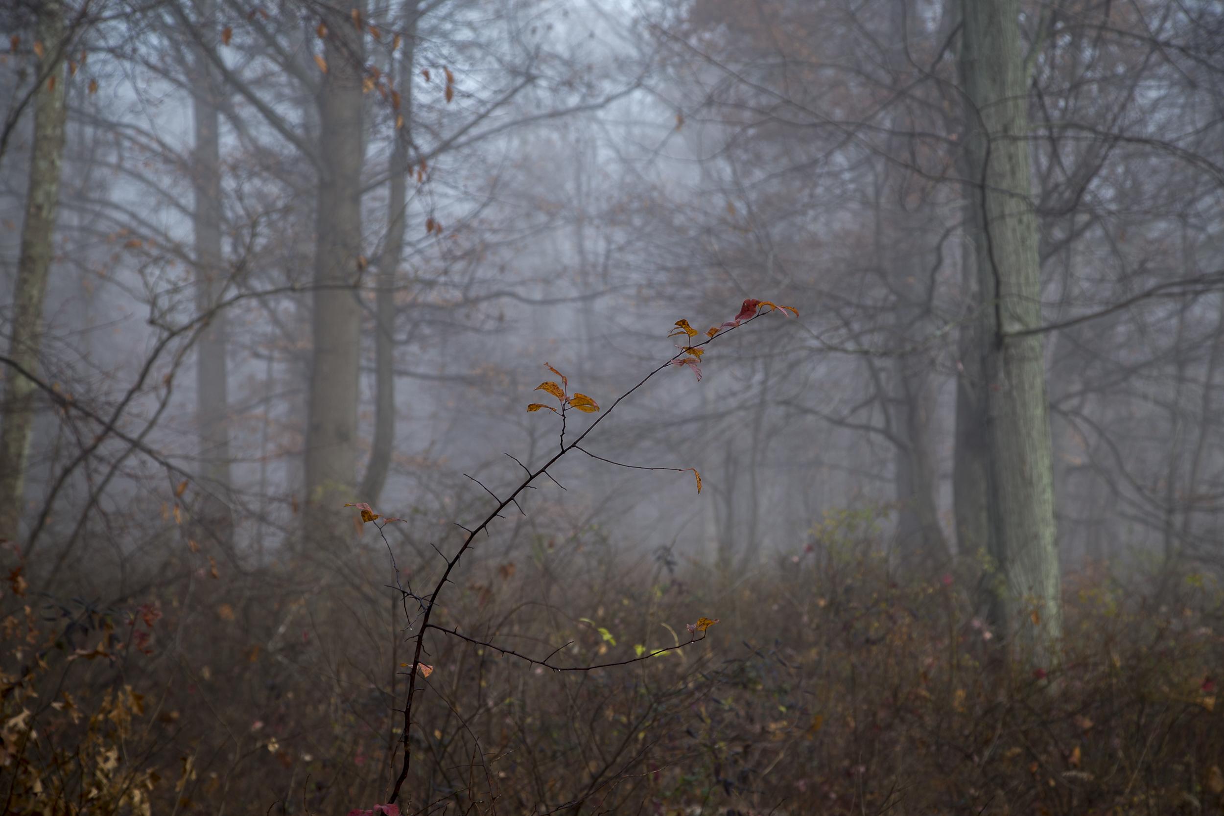 Fog-3485.jpg