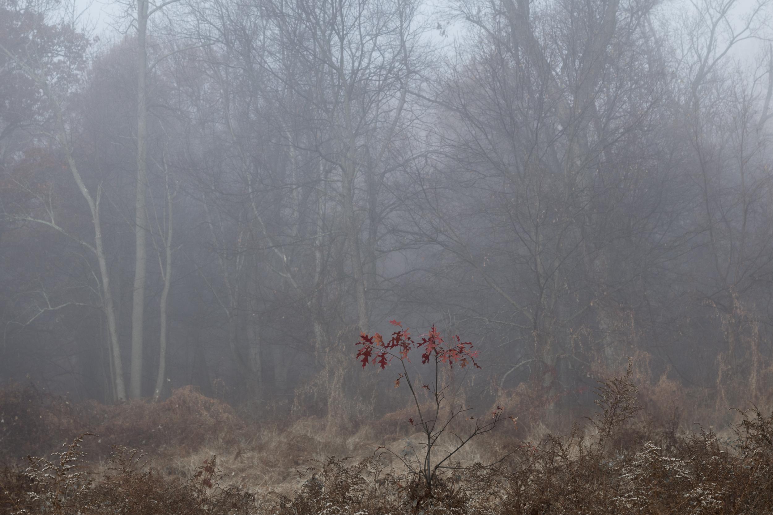 Fog-3495.jpg