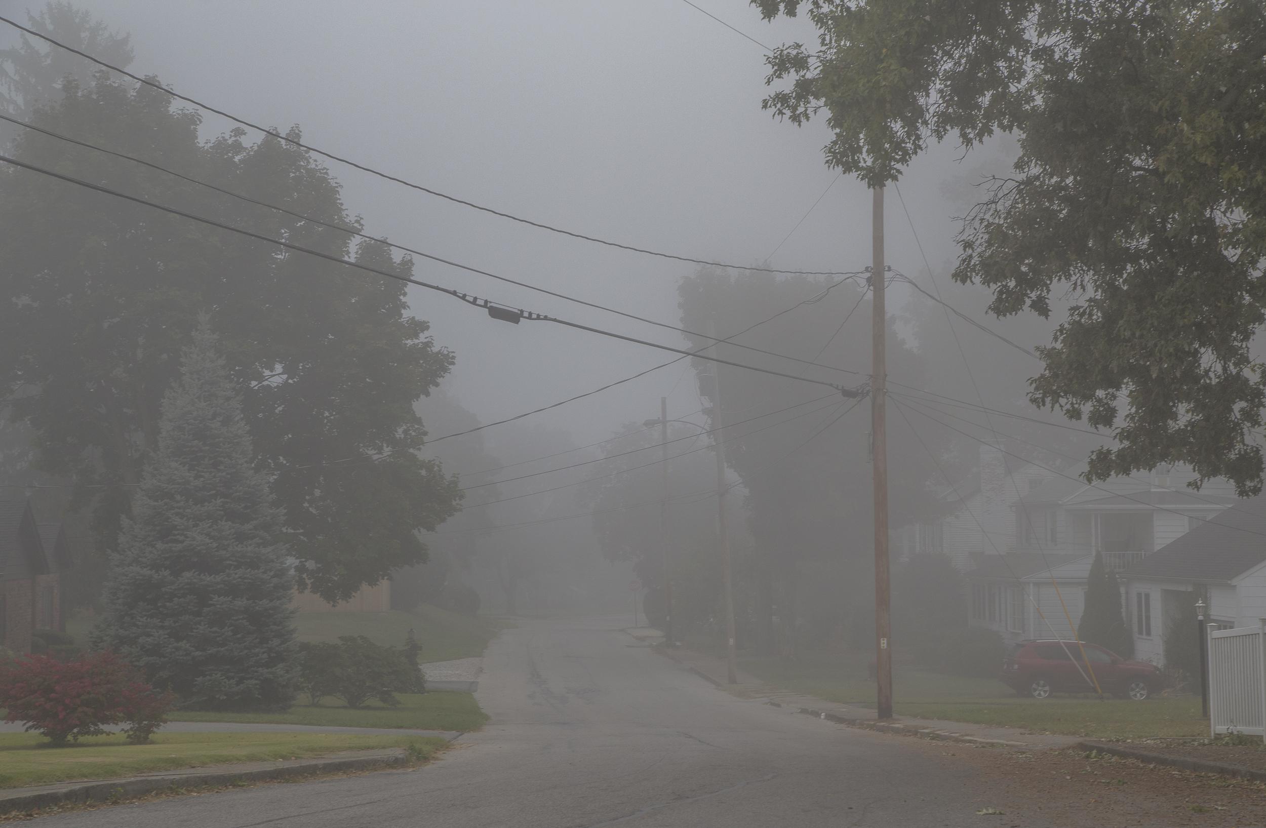 web fog-2745.jpg