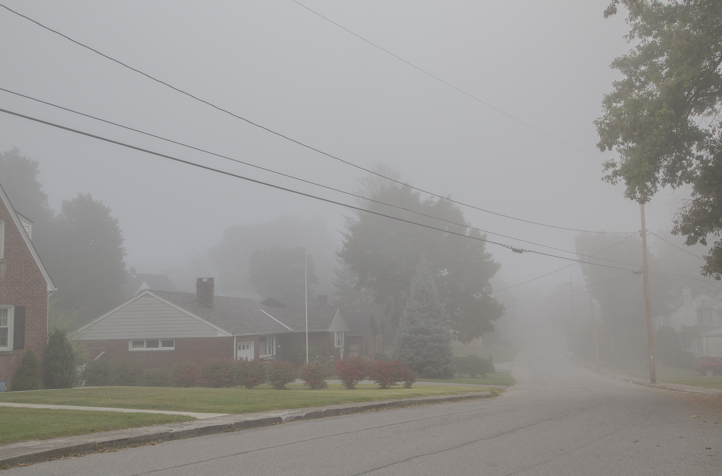 web fog-2746.jpg