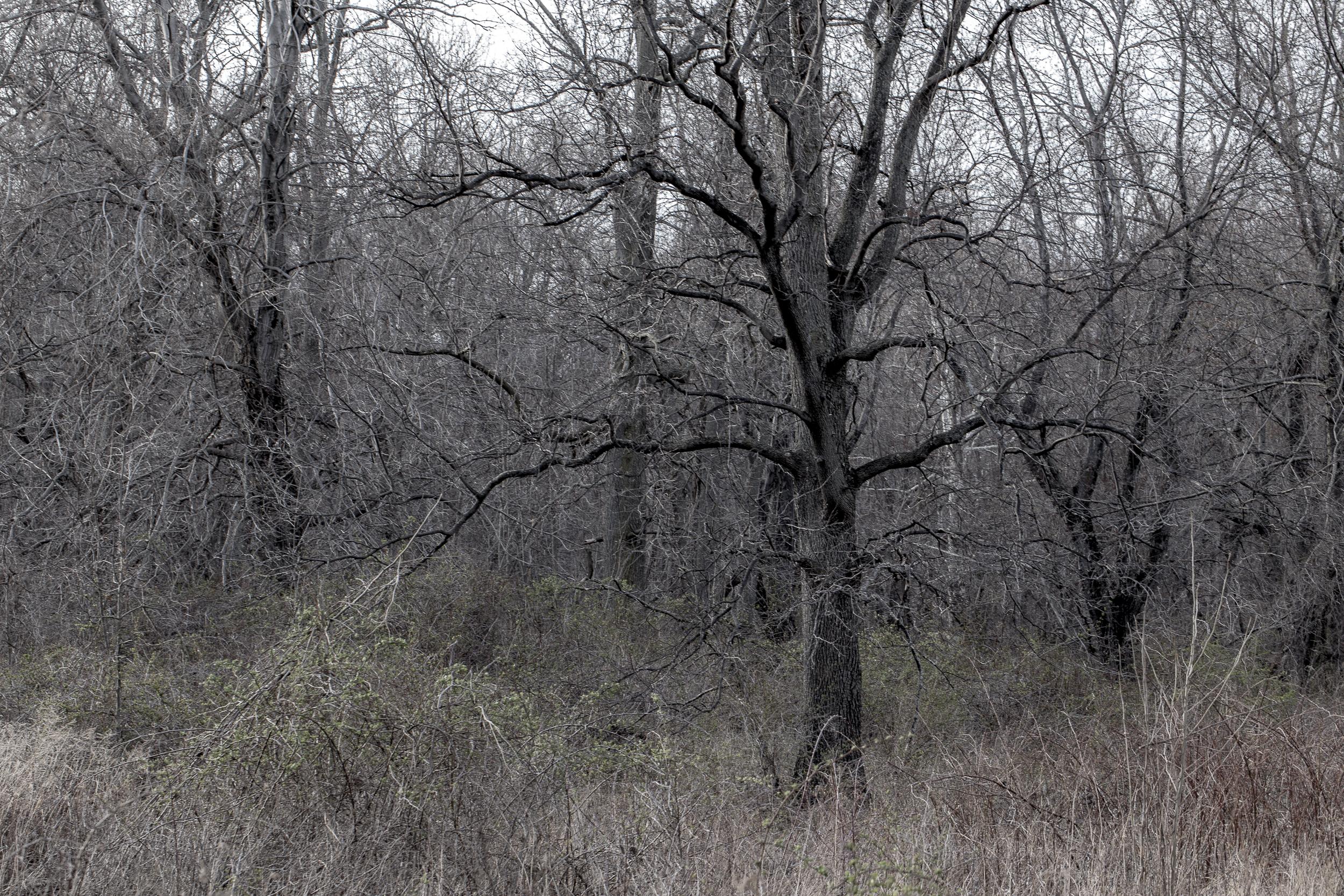 tangled-9818.jpg
