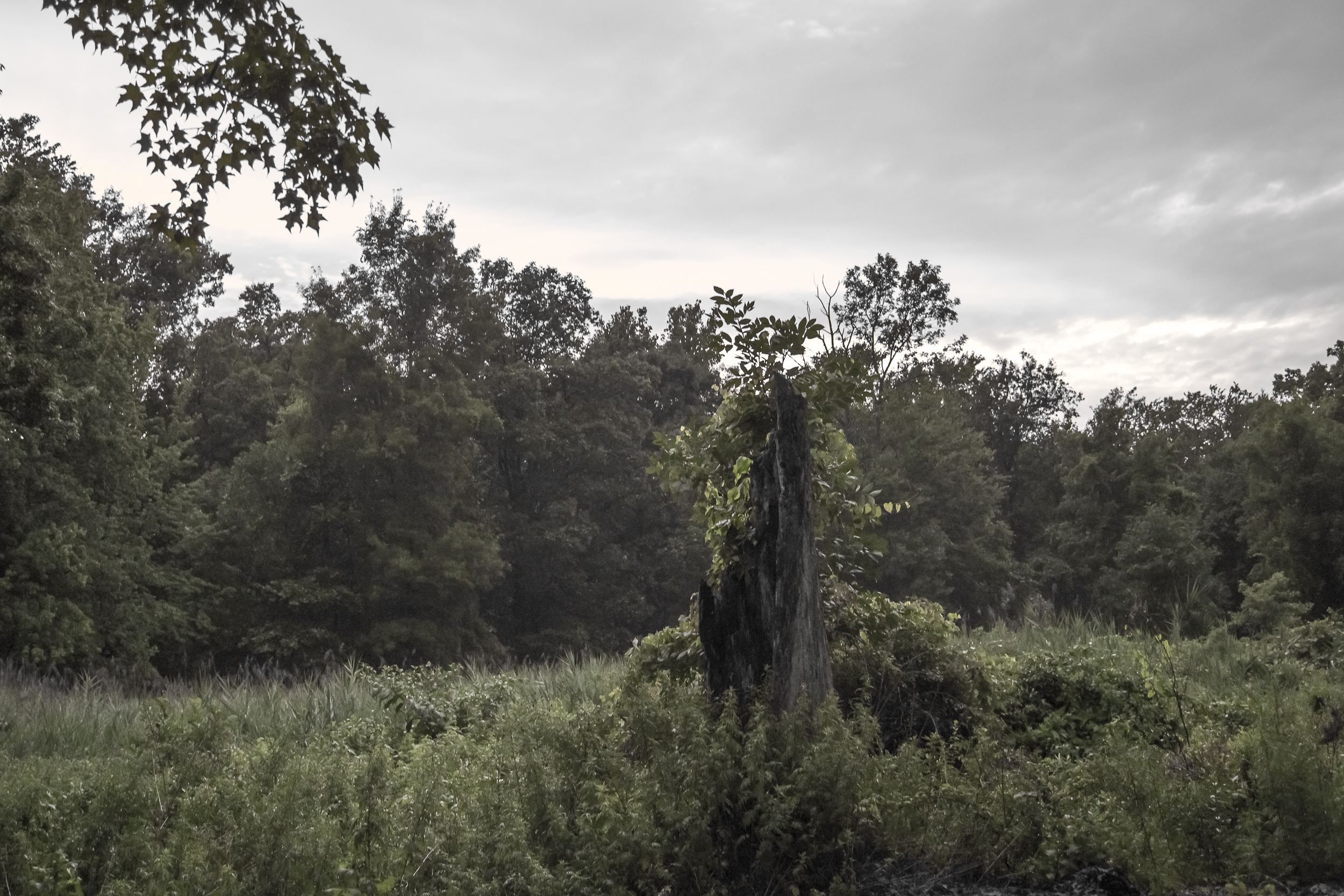 darker-2414.jpg