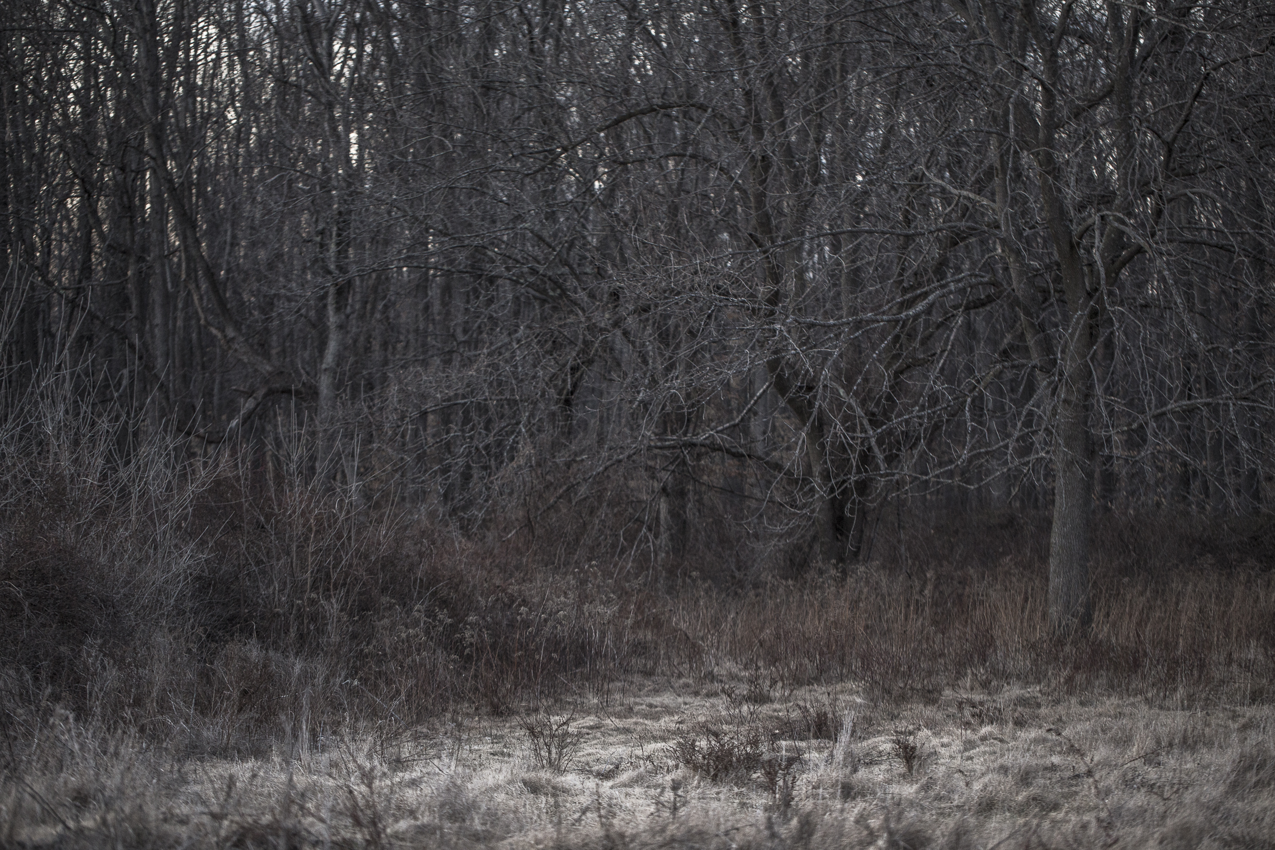darker-9294.jpg