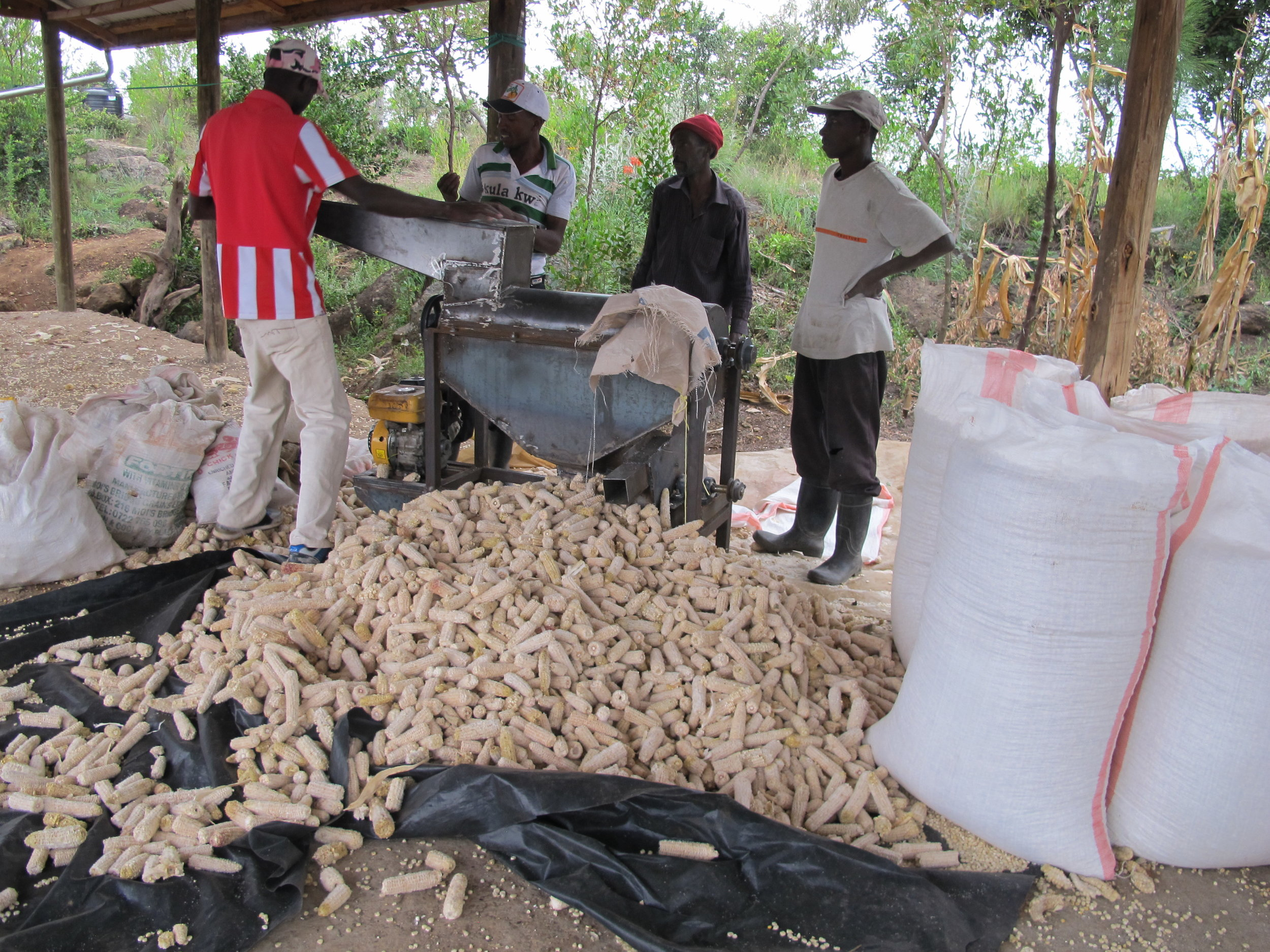 Grinding our Maize crop