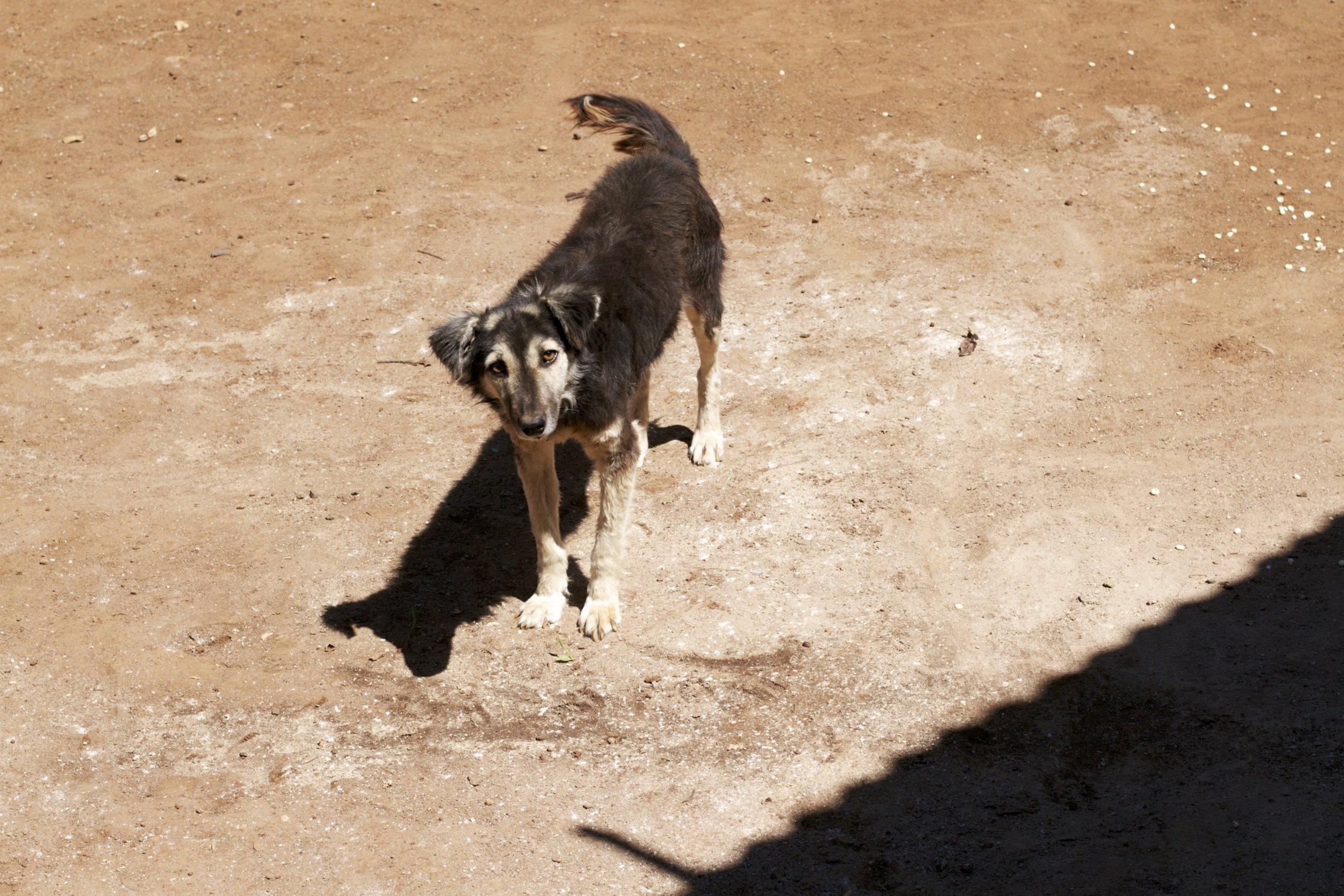 DogCucuP.jpg