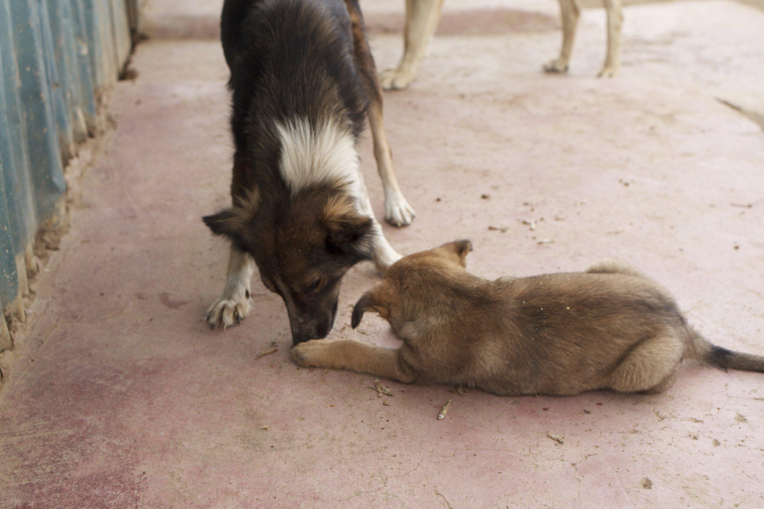 dogpuppy.jpg
