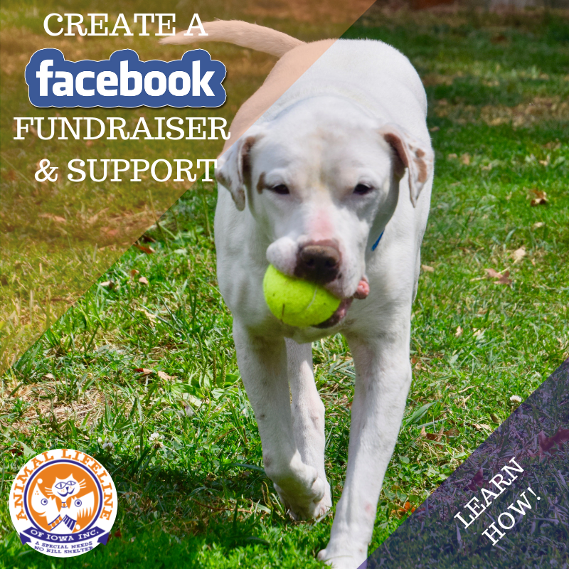 CREATE A FACEBOOK FUNDRAISER Dog.png