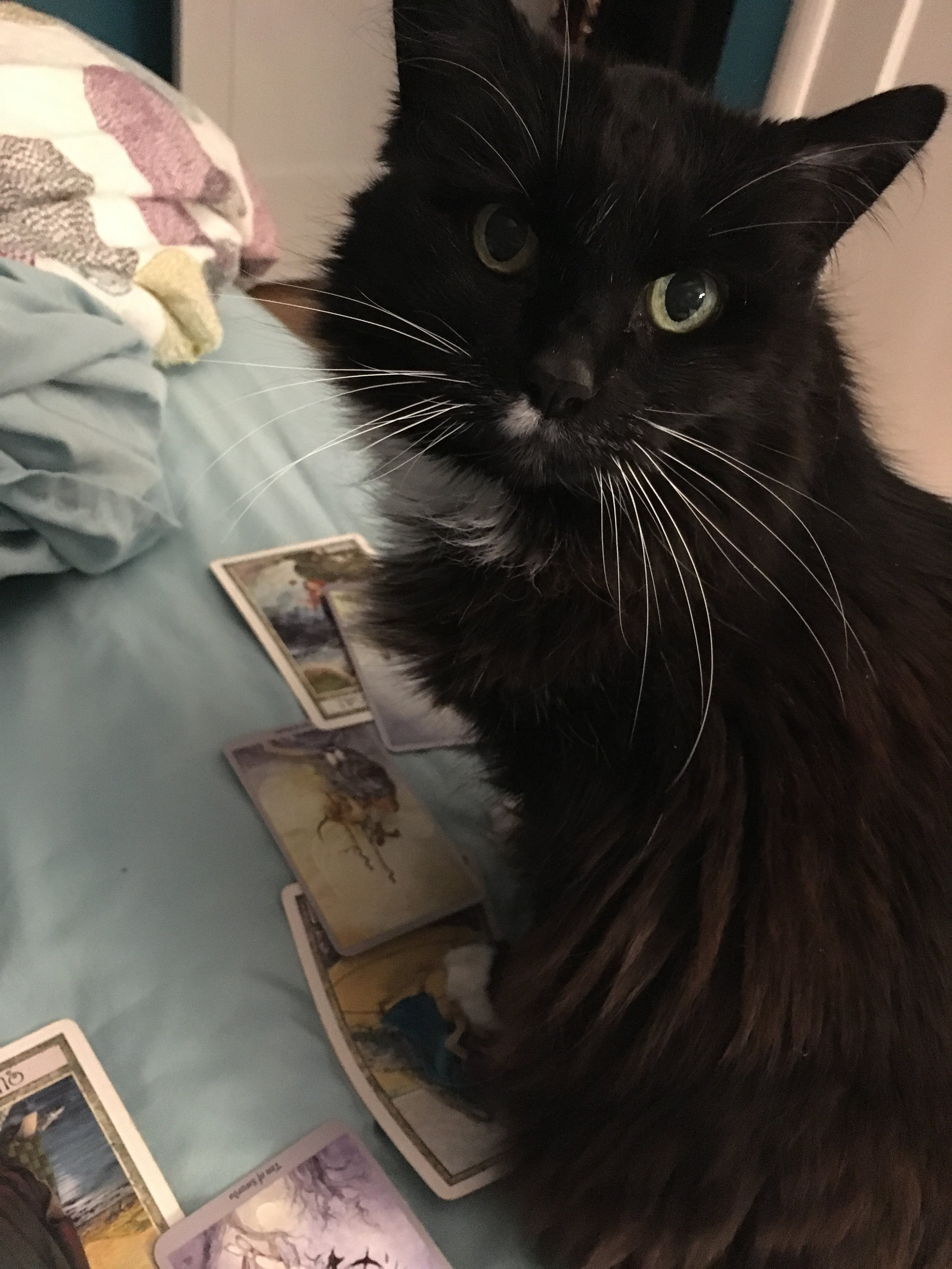Tarot in your inbox - Kittens and amy read your cards