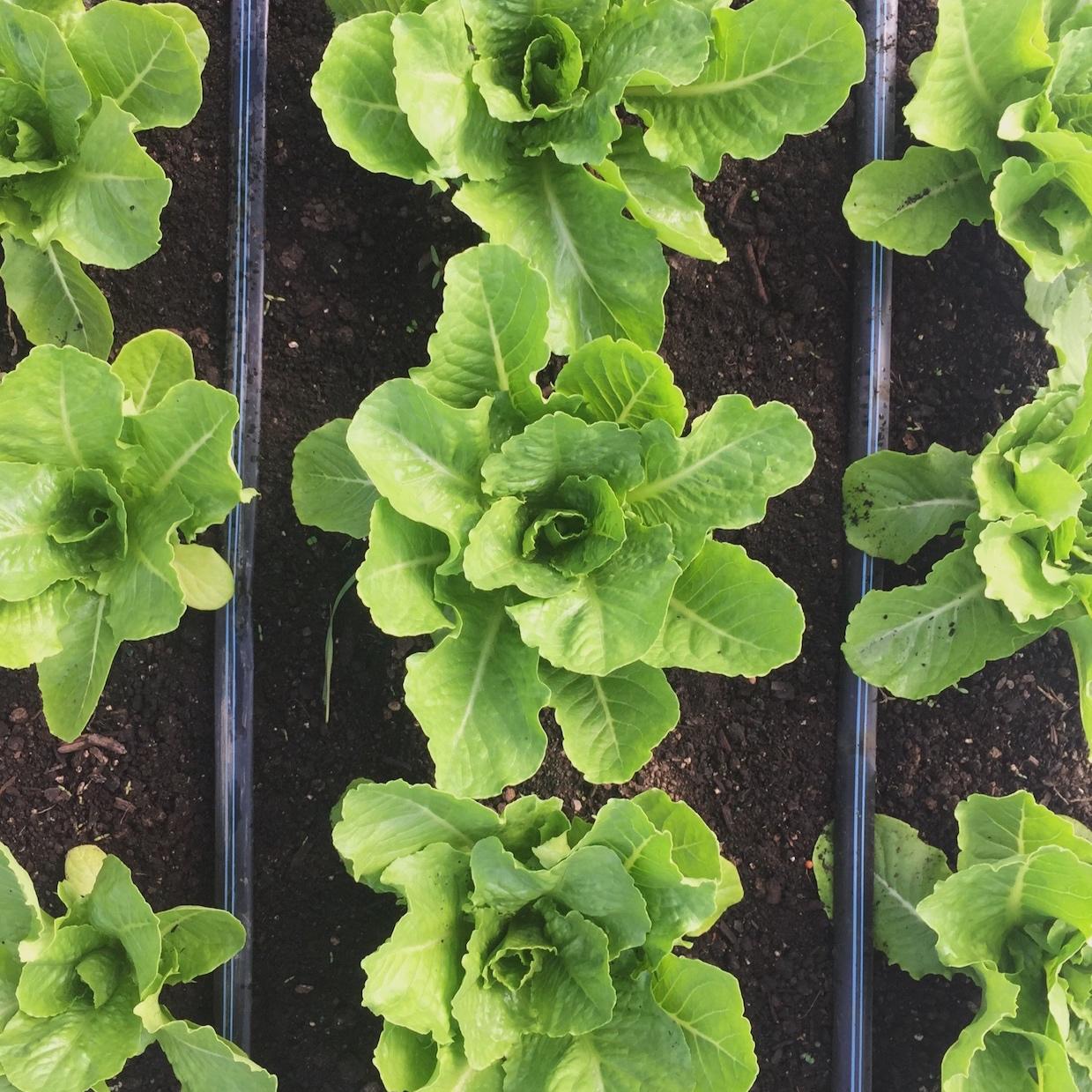 Food: What we grow -