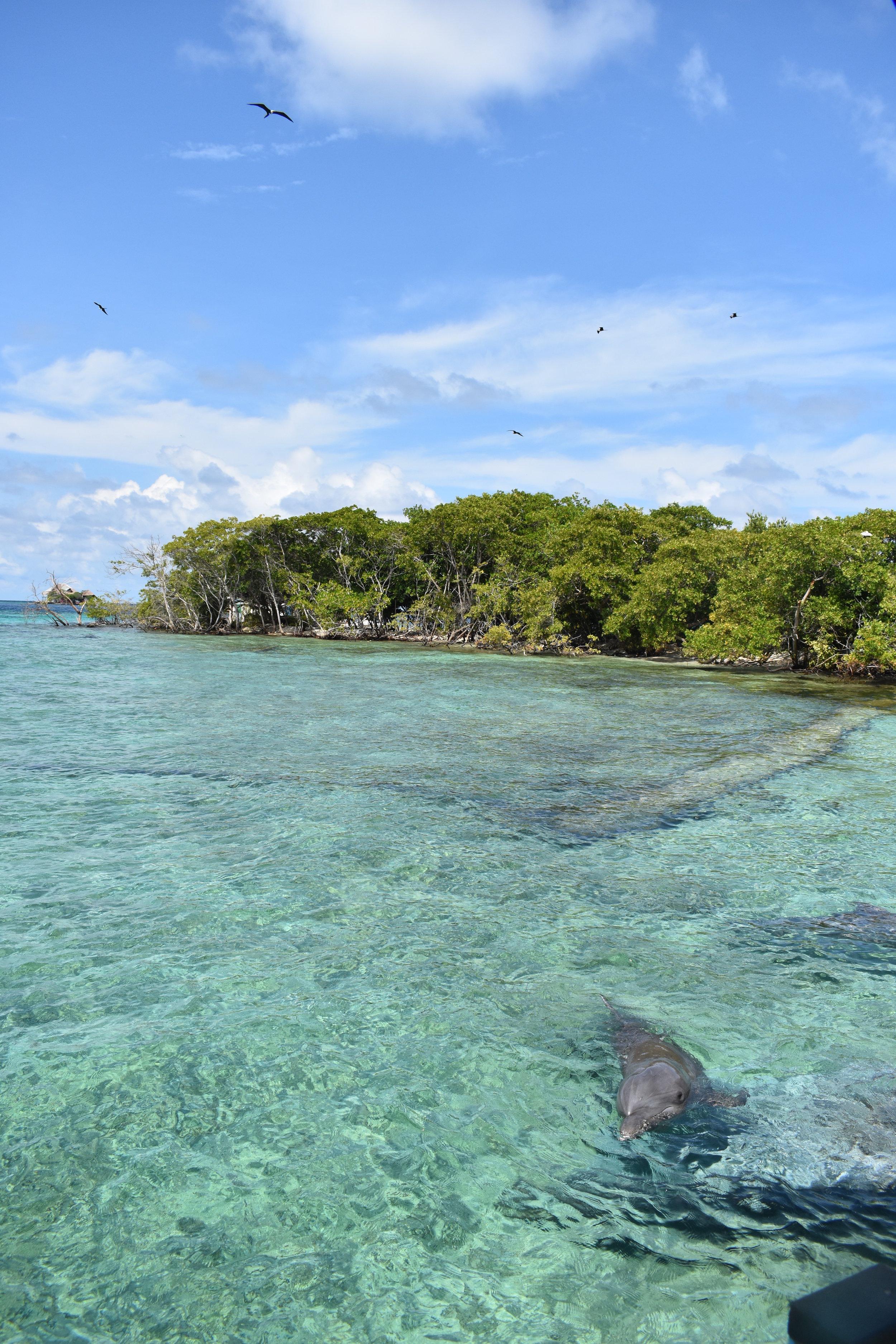 Golfinho no Oceanário de Isla de Rosário