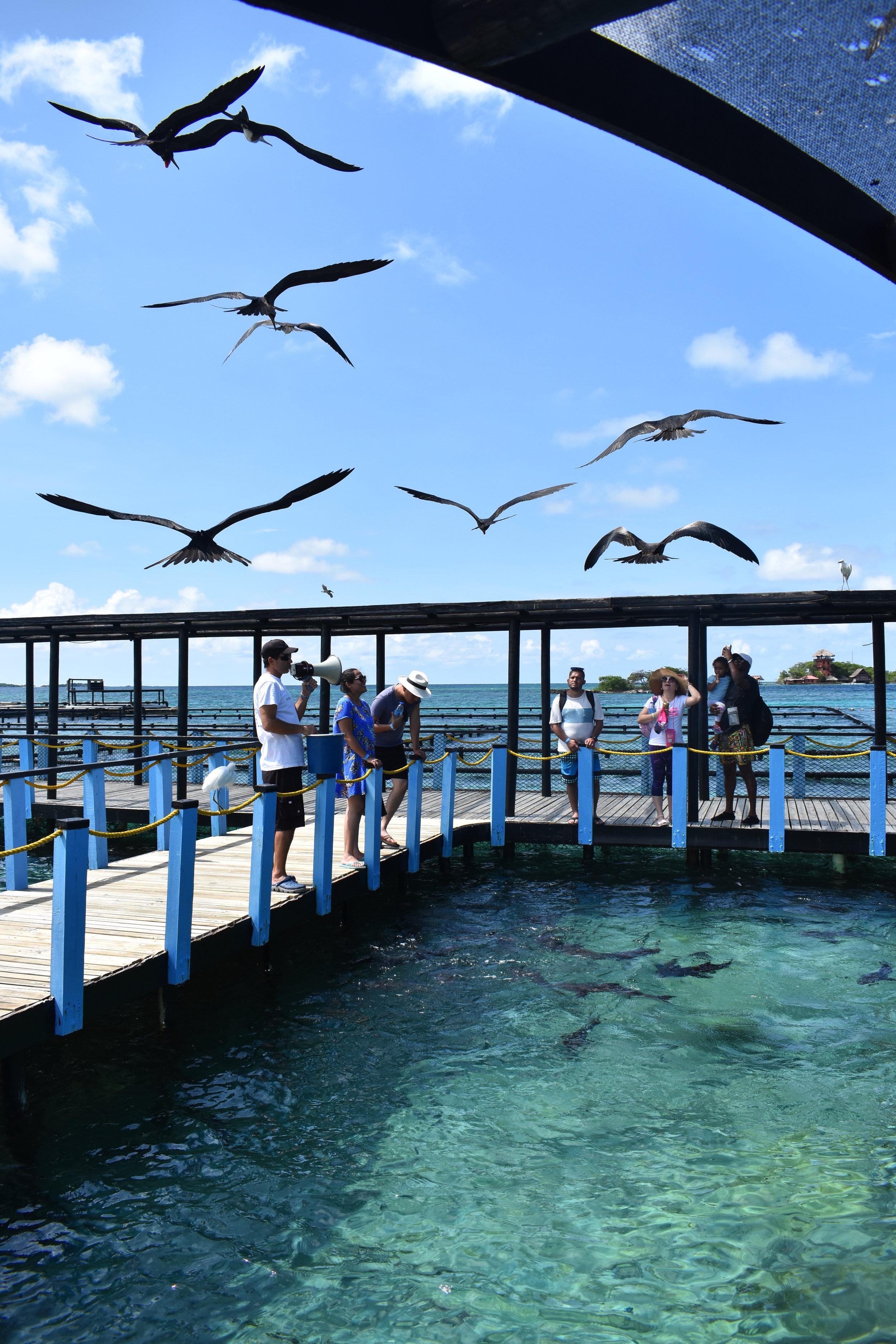 Essa foto retrata exatamente o que falei: peixes x aves .