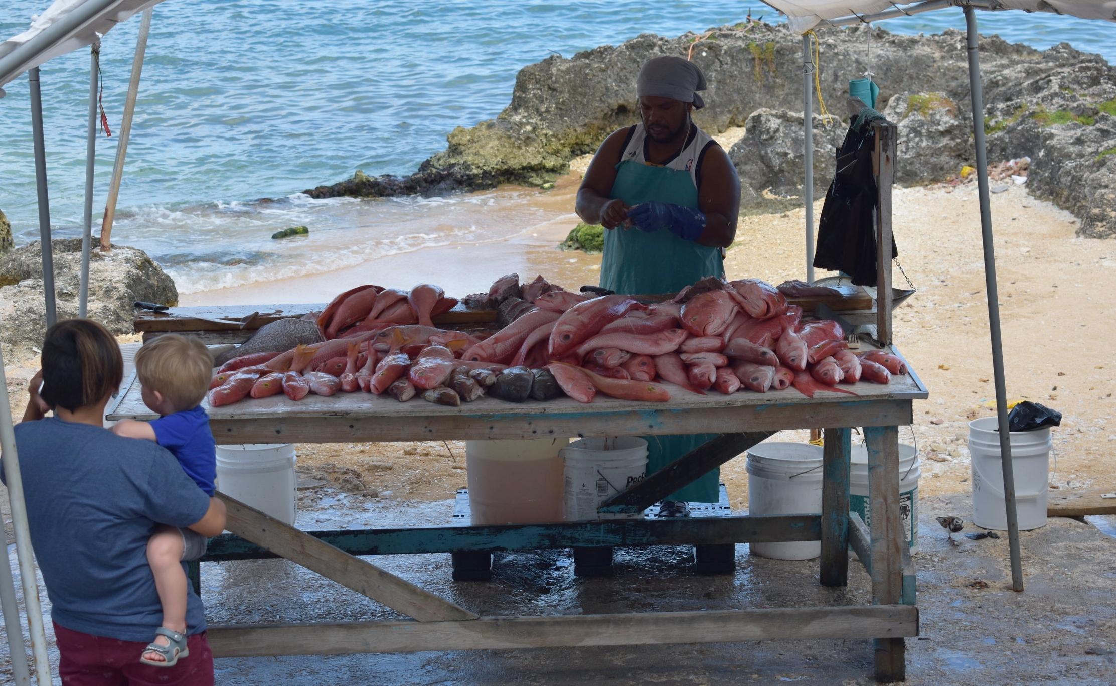 Mercado de peixe perto do Porto, eles ainda estavam tirando os peixes do barquinho