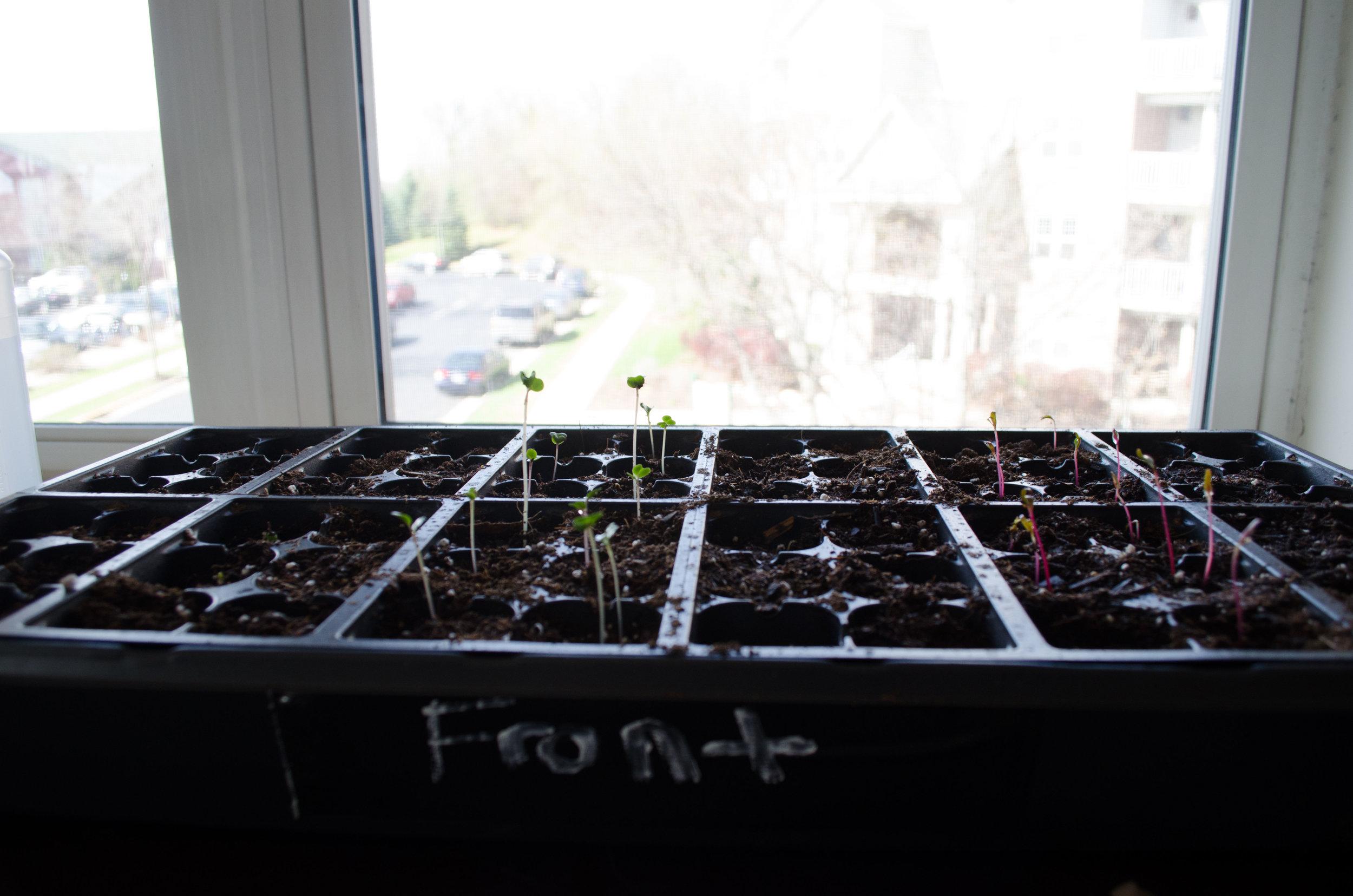 Urban Gardening - Winter Update