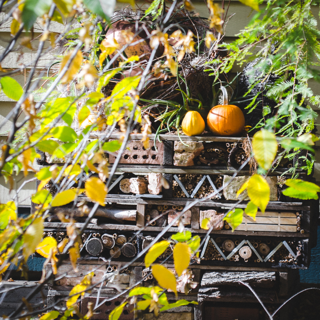 40 Pumpkins.jpg