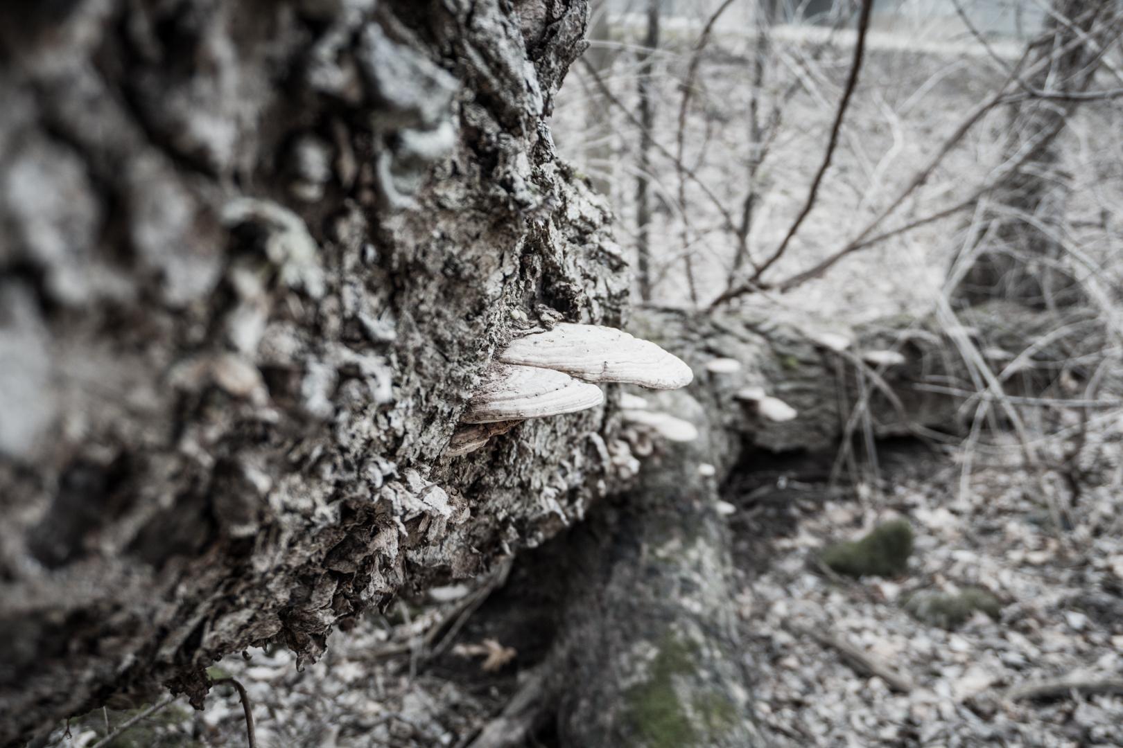 Mushroom's on a tree