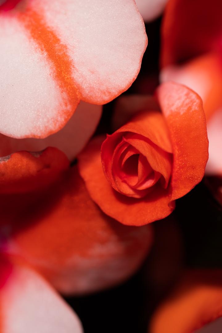 The Macro Flower Shoot