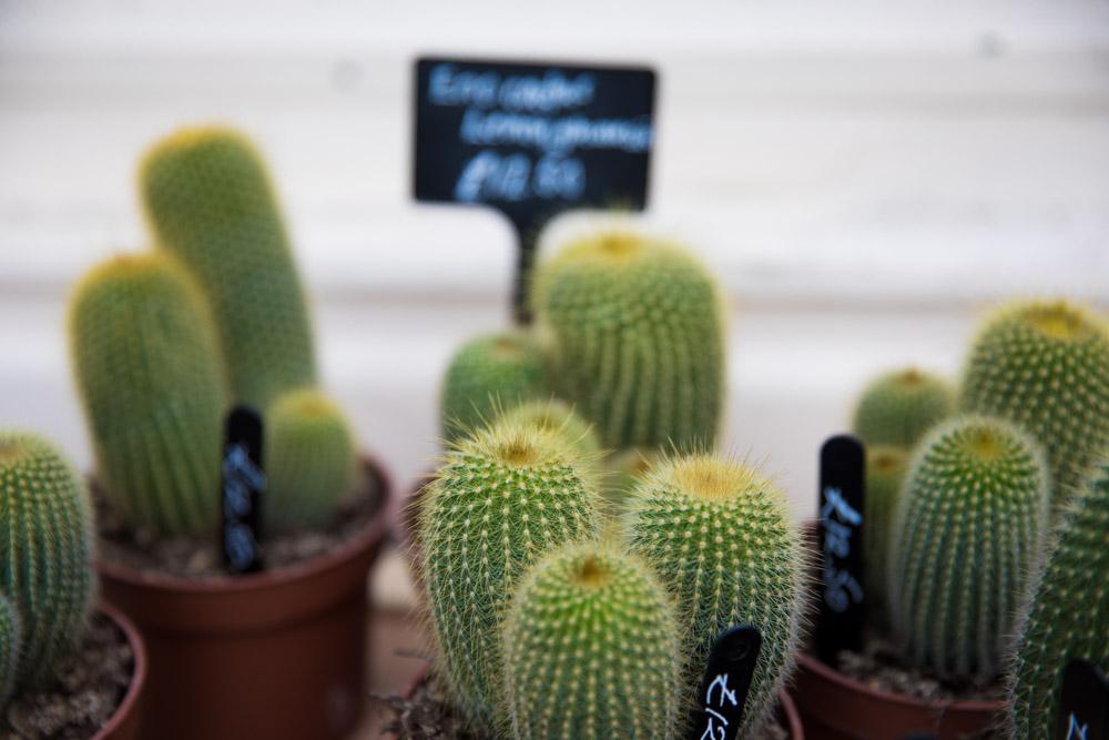 Cactus Plants Brighton Street